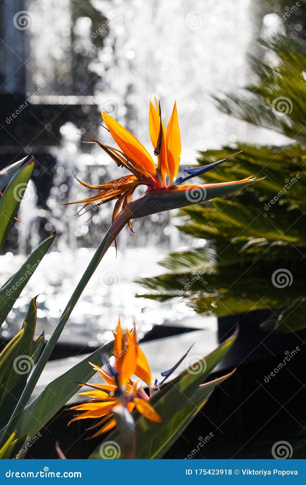 Gift Card Bird of Pardise Flowers
