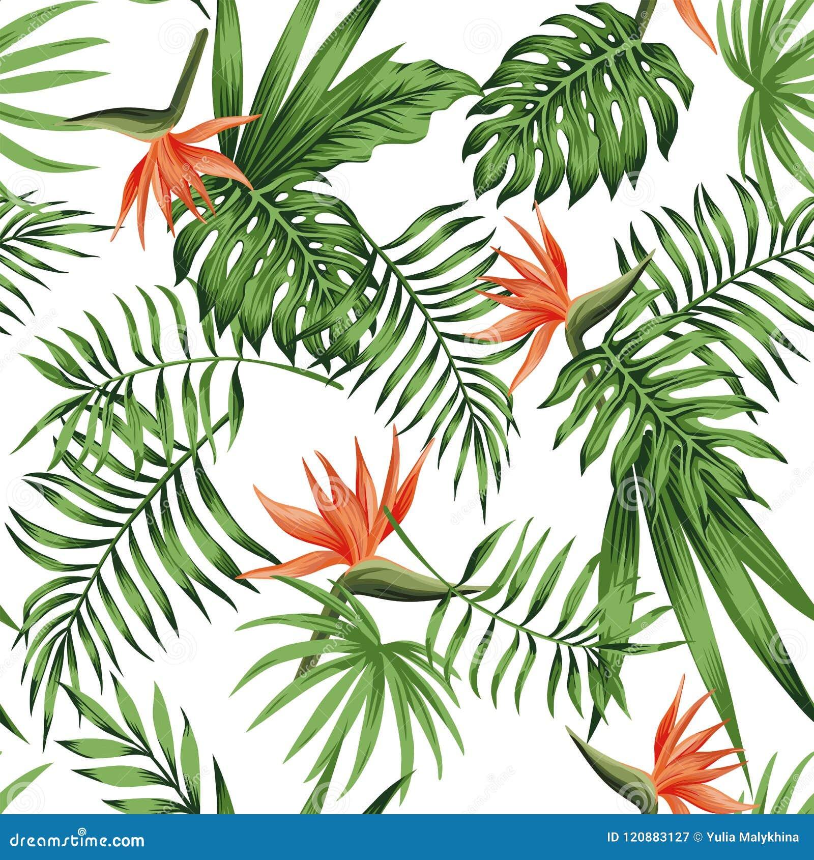Strelitzia Orange White Background Pattern Stock Vector