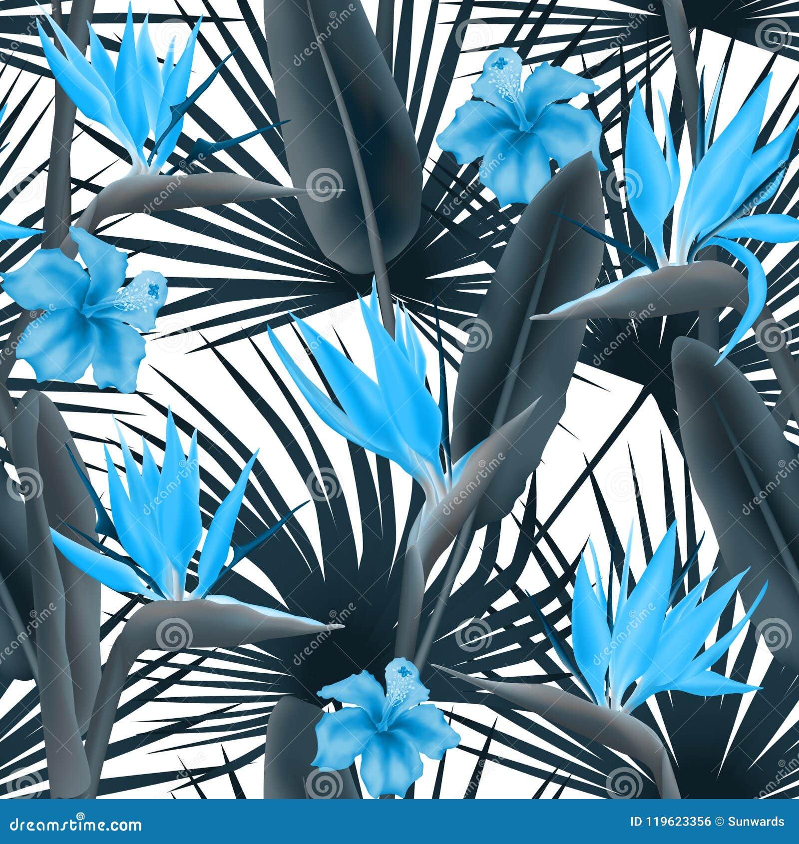 Strelitzia Reginae okwitnięcie także znać jako dźwigowy kwiat lub ptak raj, hawajczyka poślubnik i palma, opuszcza bezszwowy