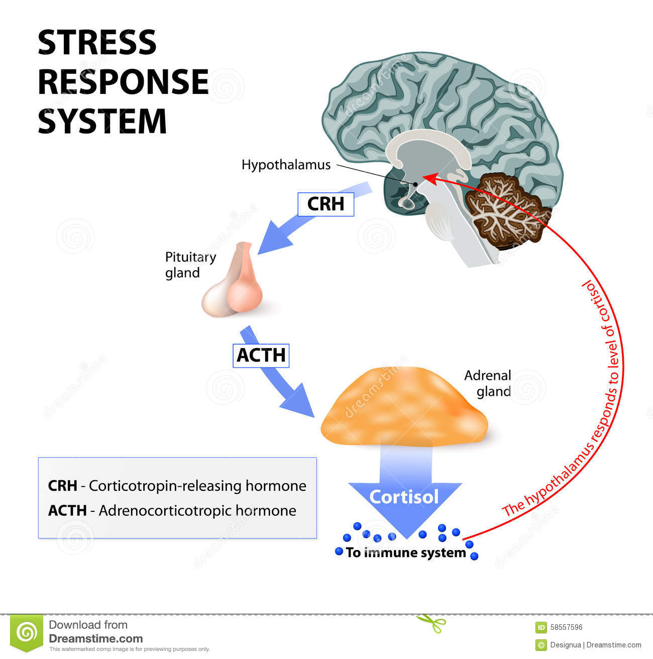 The causes of stress and the effects of stress management on the reduce of stress levels
