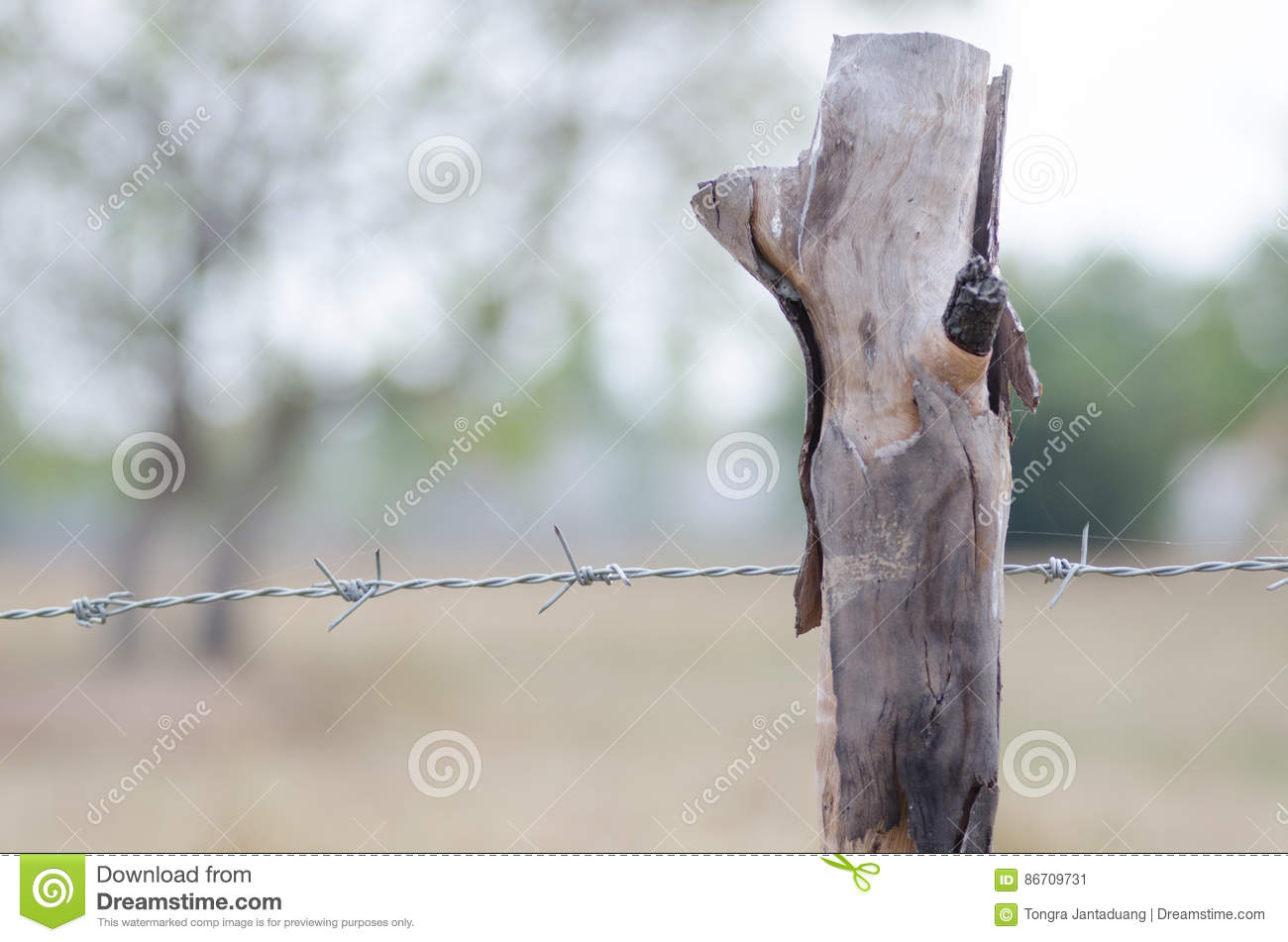 Stretching Barbed Wire Fence | Stretched Barbed Fence With Trees Around The Farm Saturday Morni