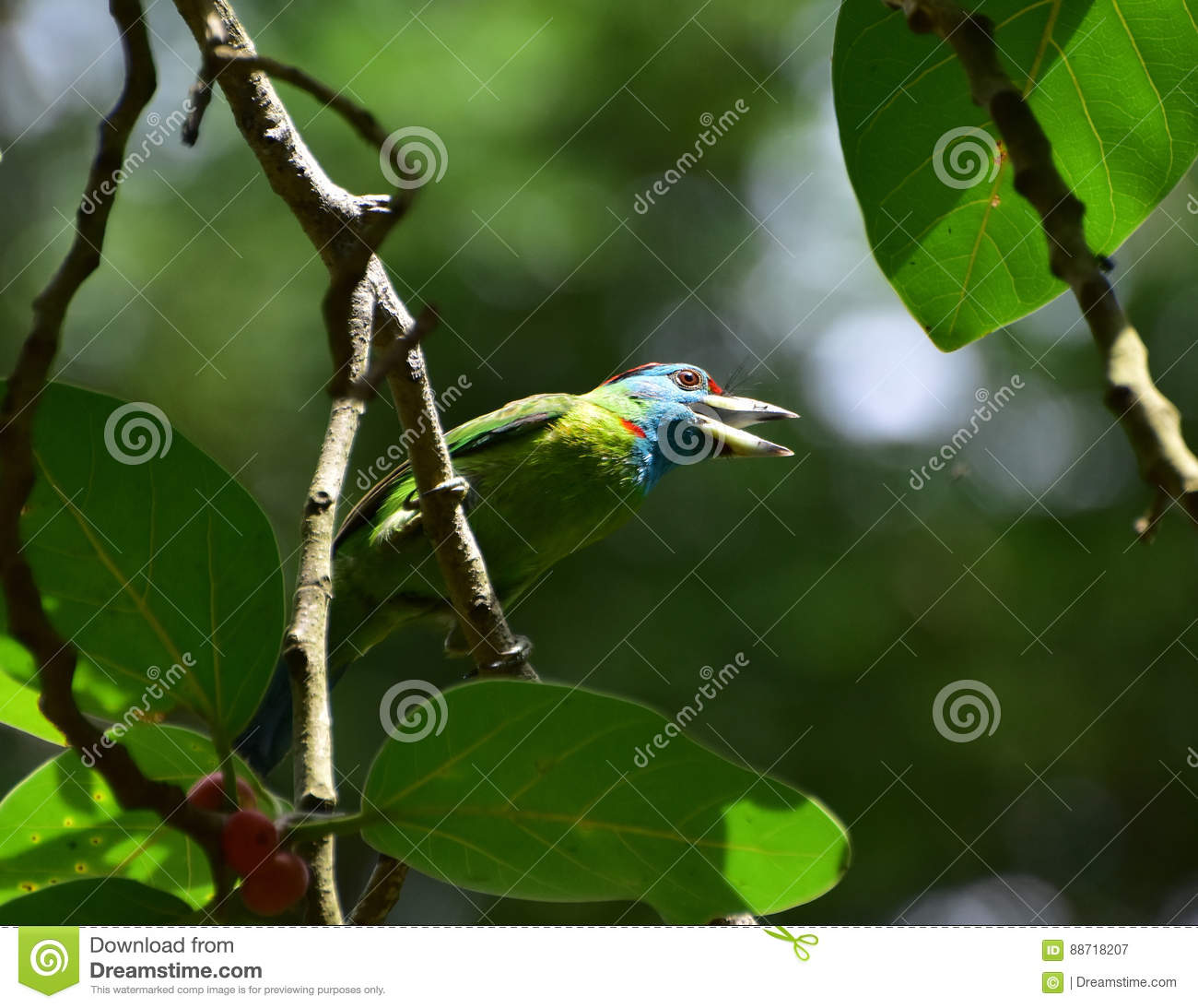 Stretching out stock image  Image of bird, nature, throated