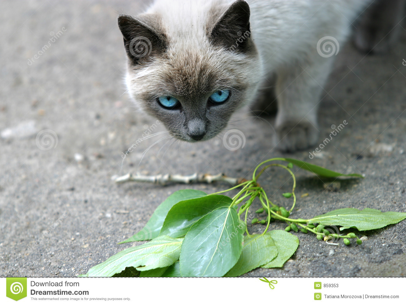how get rid of cat urine smell from carpet