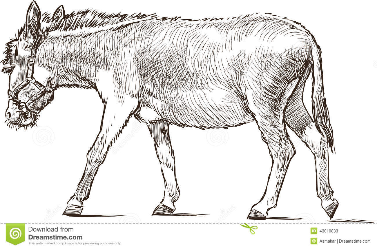how to draw a burro
