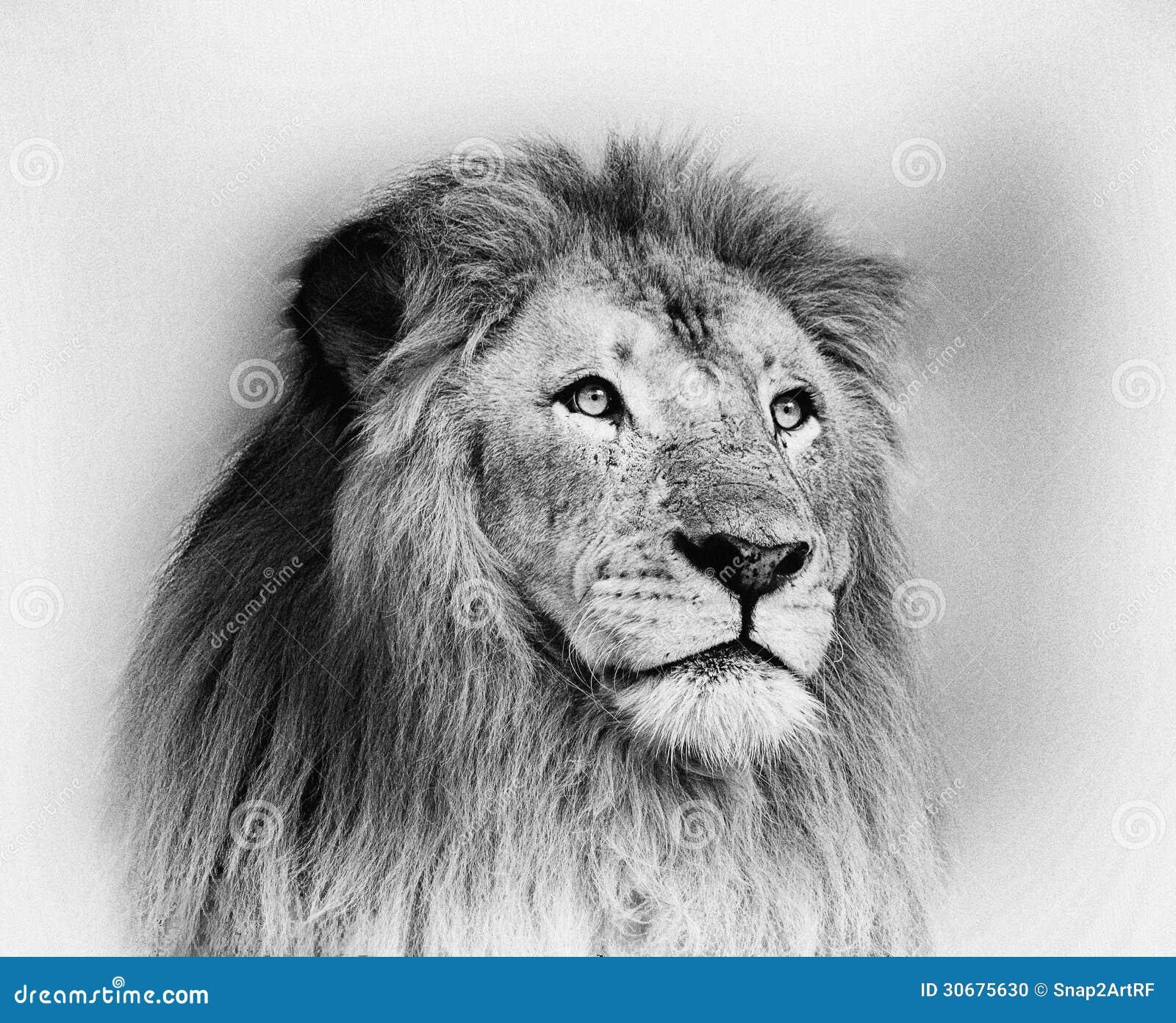 White lion face images - photo#11