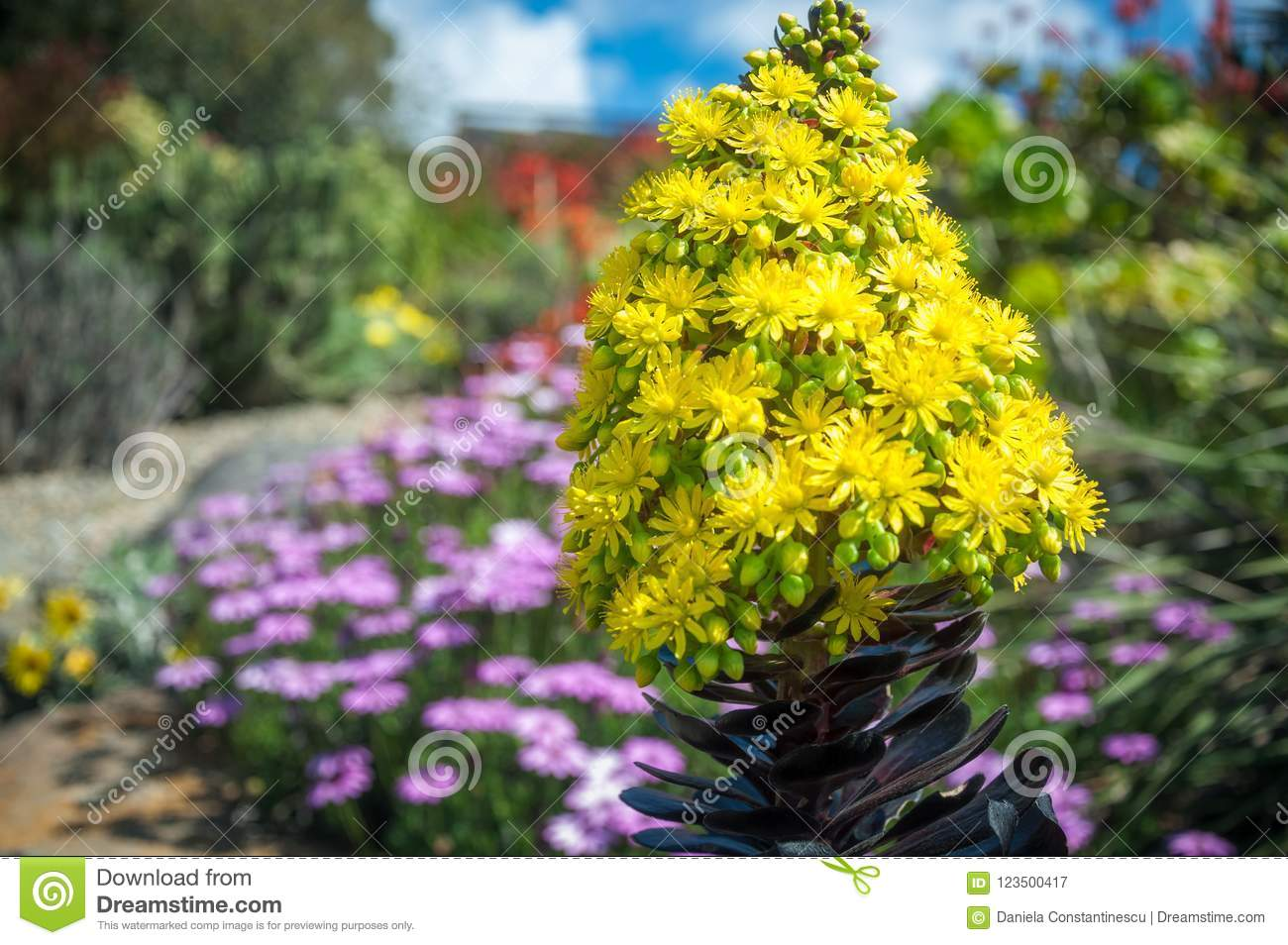 Beautiful Yellow Flowers On A Garden Background Stock Image Image