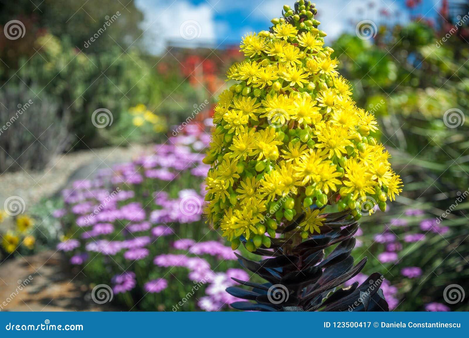Beautiful yellow flowers on a garden background stock image image download beautiful yellow flowers on a garden background stock image image of concept field mightylinksfo