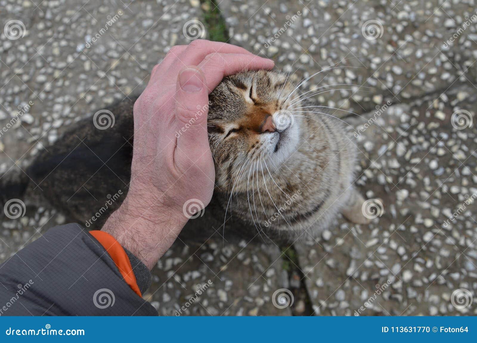 Strimmig kattkatten tycker om smekning vid en manhand