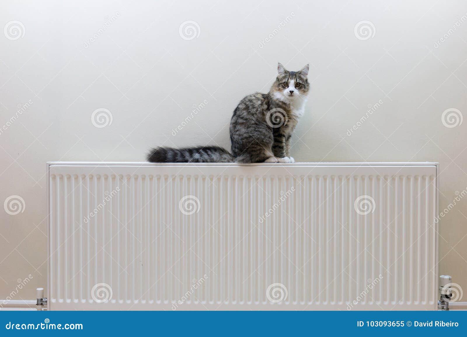 Strimmig kattkattunge som överst ligger av ett element