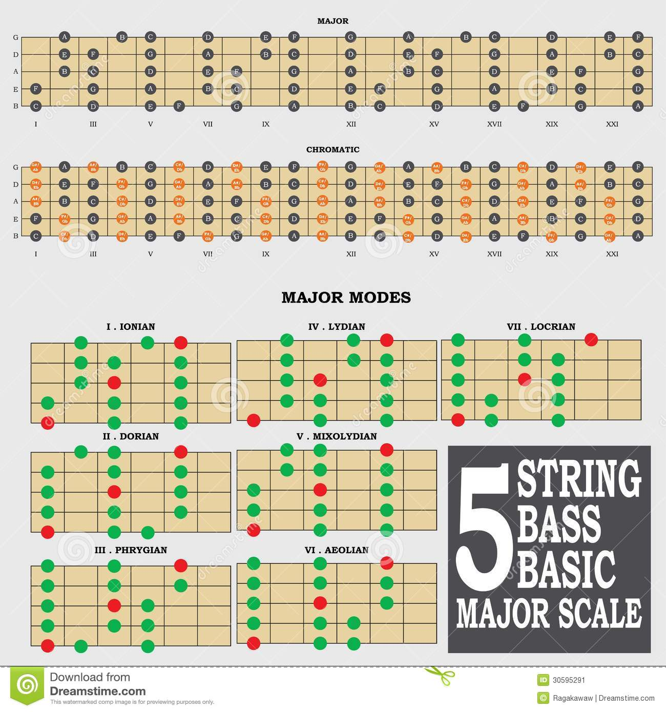 5 string bass basic major scale for bass player te stock image image 30595291. Black Bedroom Furniture Sets. Home Design Ideas
