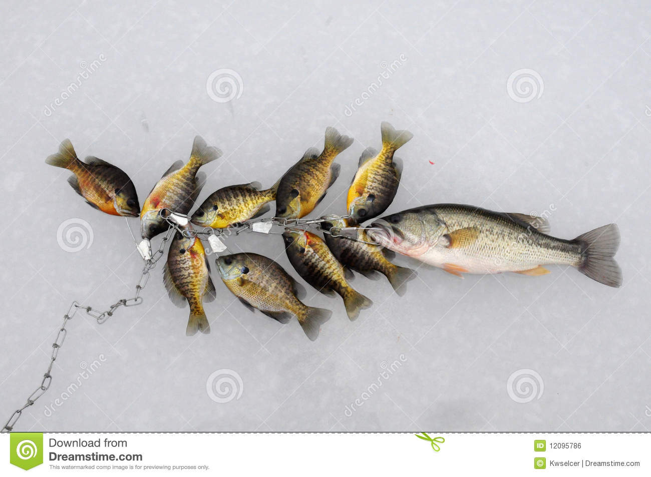 Stringer of fish royalty free stock image image 12095786 for How to use a fish stringer