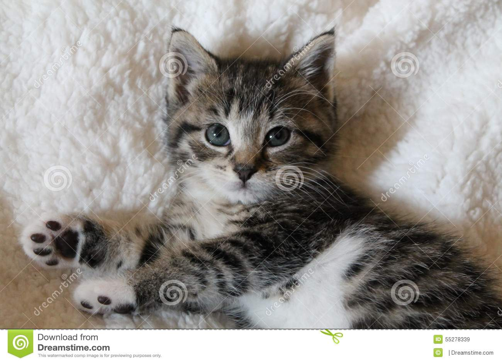 Striped котенок ситца