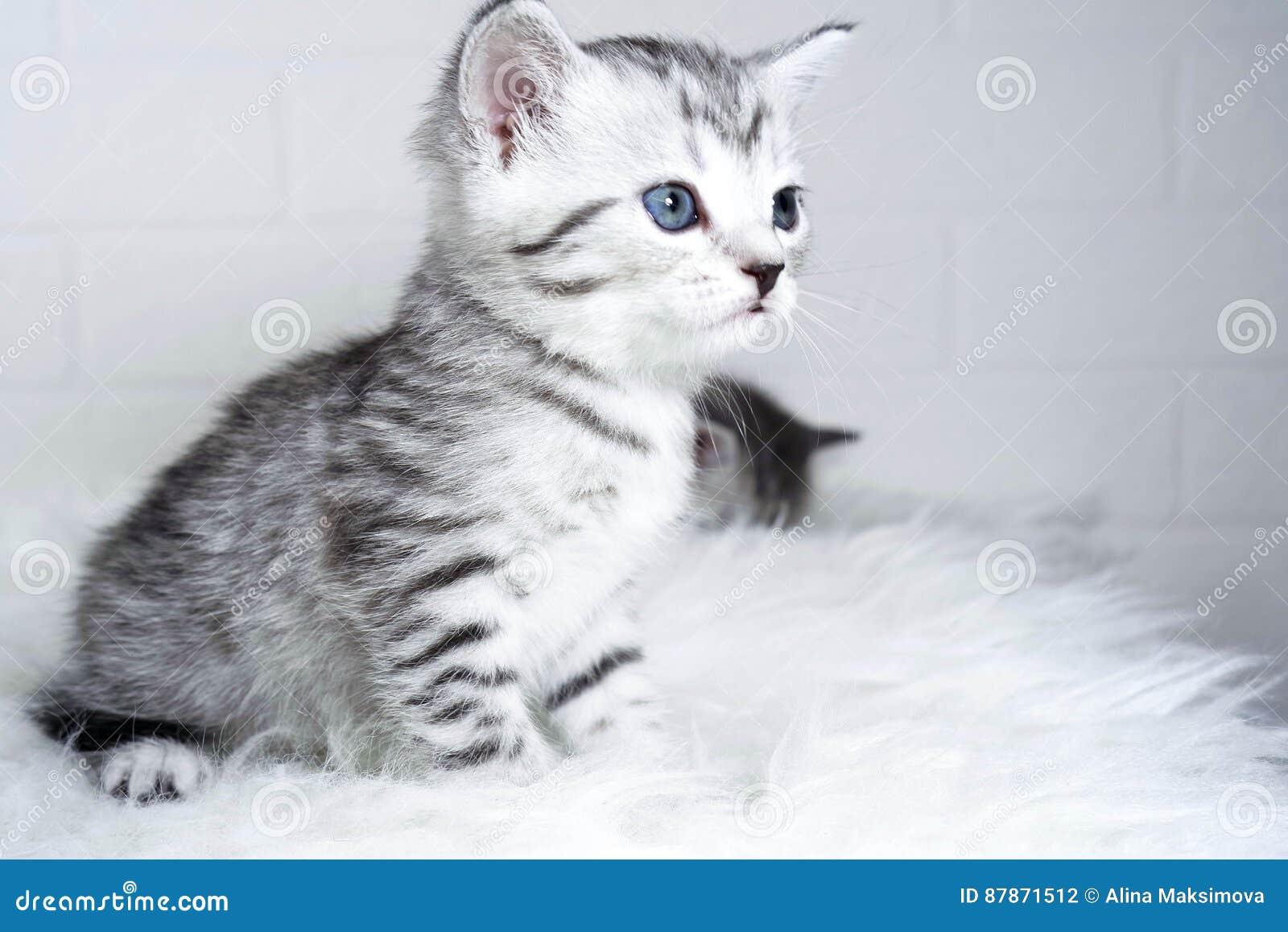 Striped котенок сидя в профиле