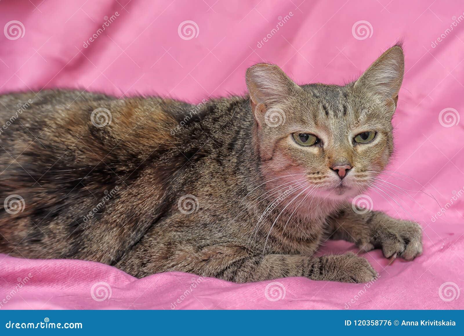 Striped кот с закрепленным ухом