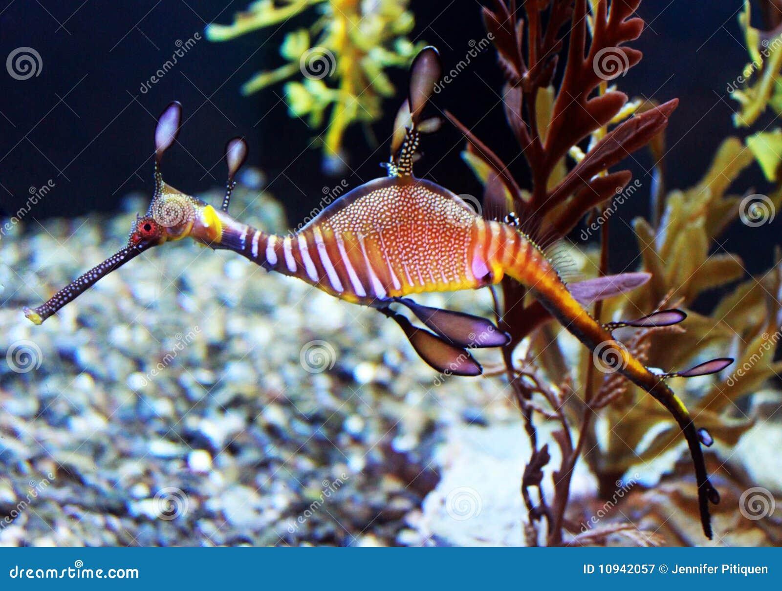 Striped море дракона