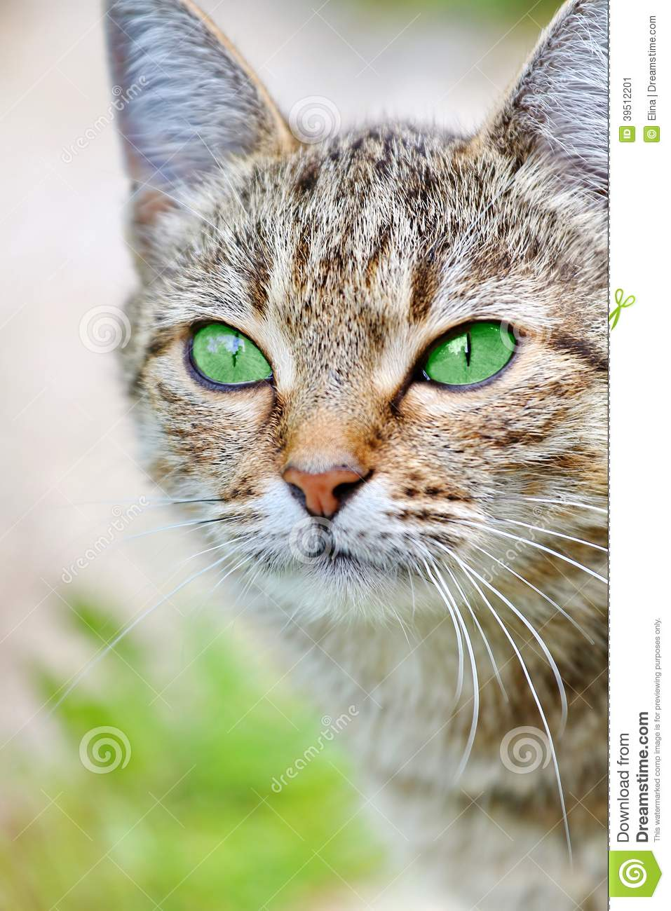 Beautiful Grey Waterproof Flooring Ideas For Living Room: Striped Cat With Green Eyes Stock Photo
