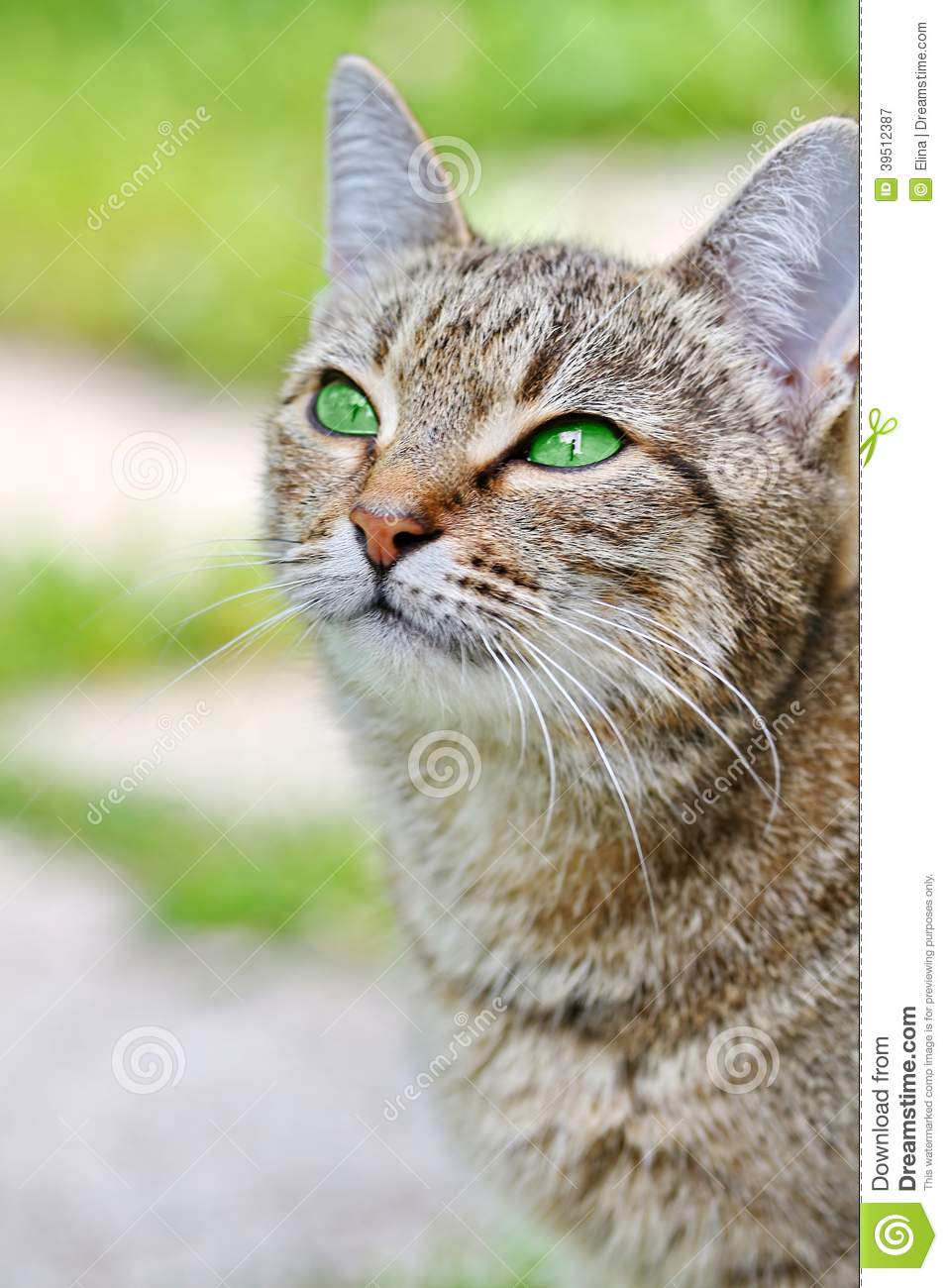 Beautiful Grey Waterproof Flooring Ideas For Living Room: Striped Cat With Green Eyes Stock Image
