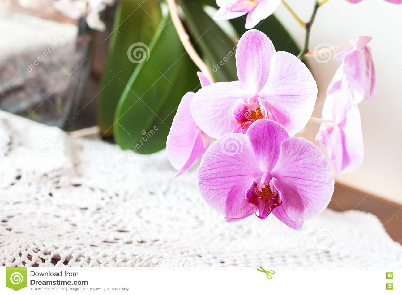 pink orchids close up - photo #35