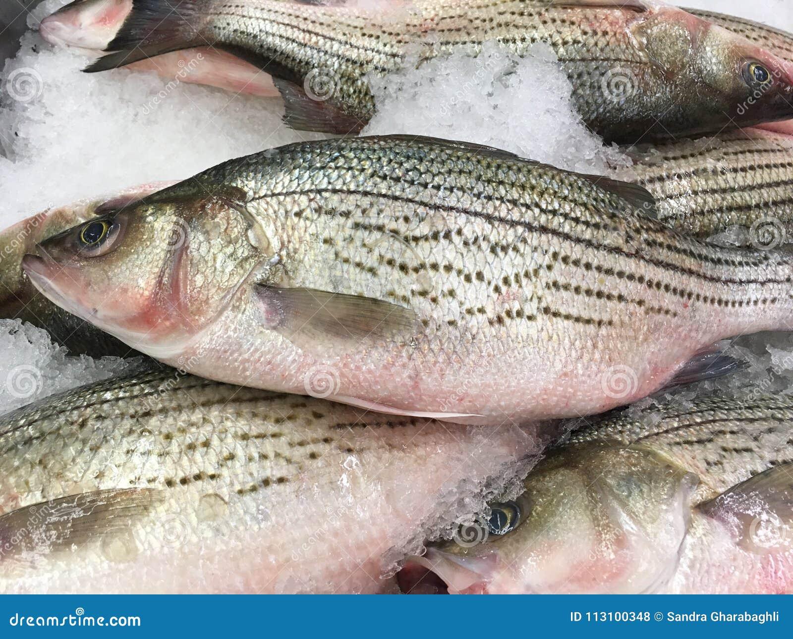 Valuable phrase sea bass striped bass