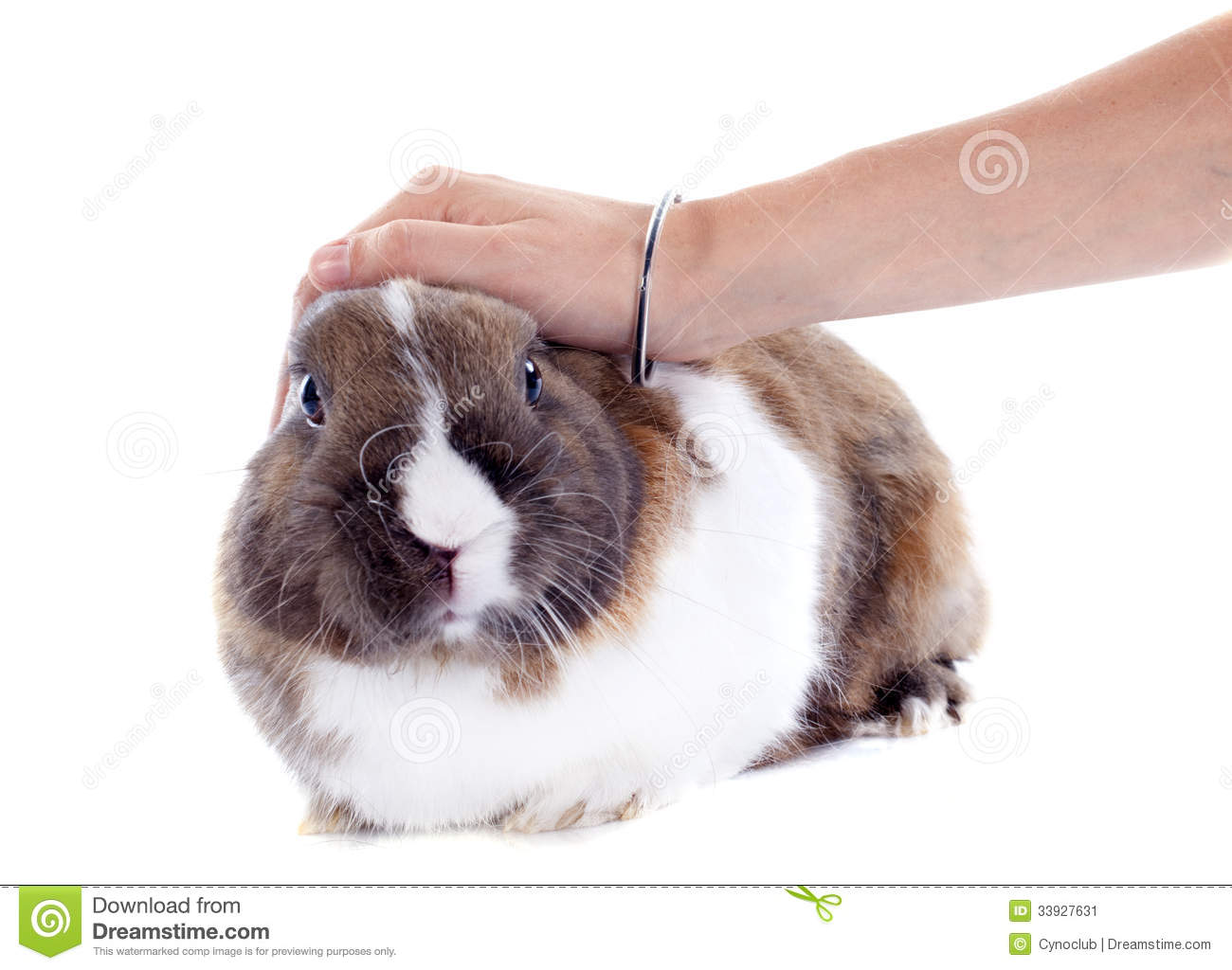 how to kill rabbit in hand