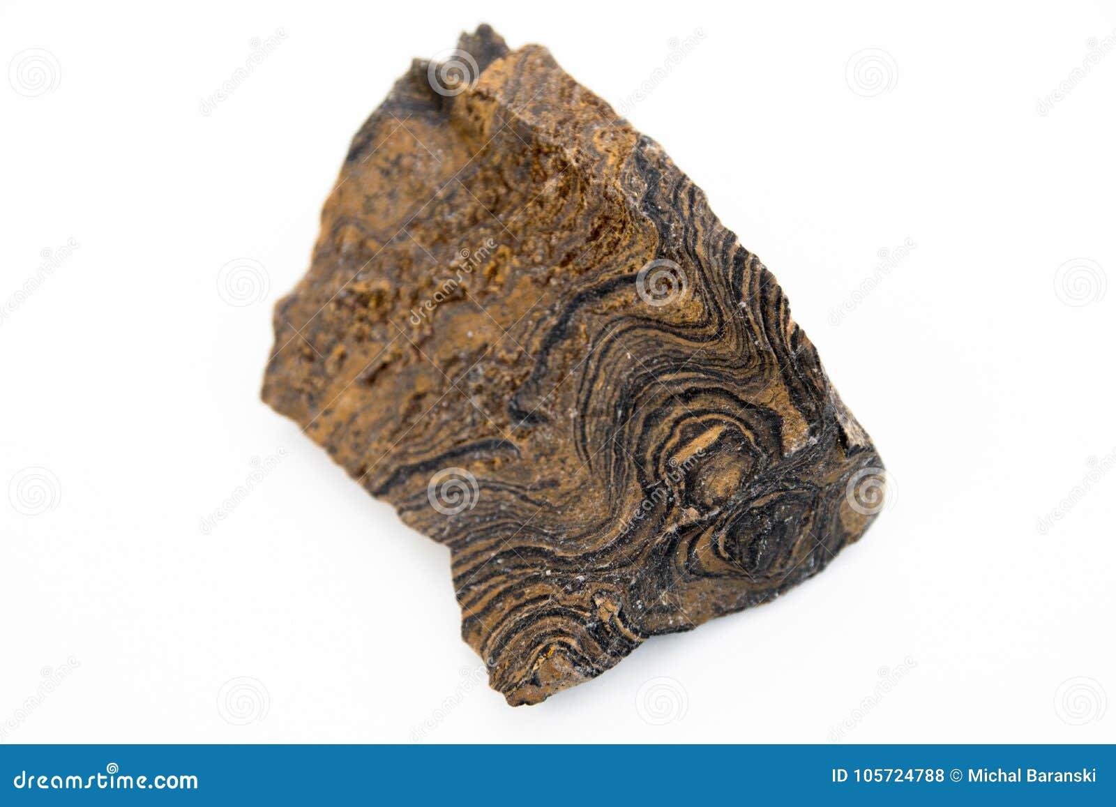 Stromatolitemineraal over wit wordt geïsoleerd dat