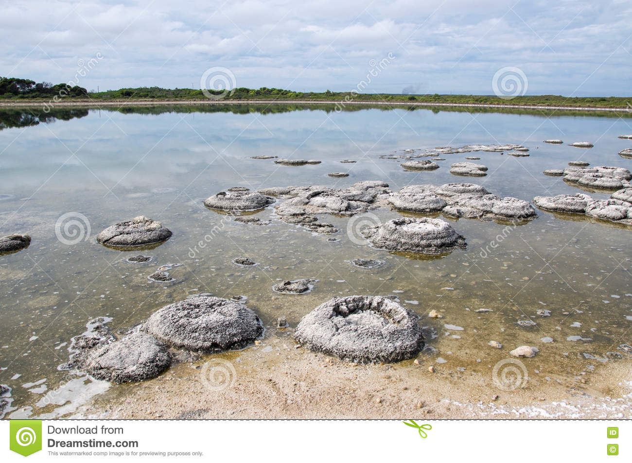 Stromatolites In Lake Thetis Stock Photo - Image: 73023446