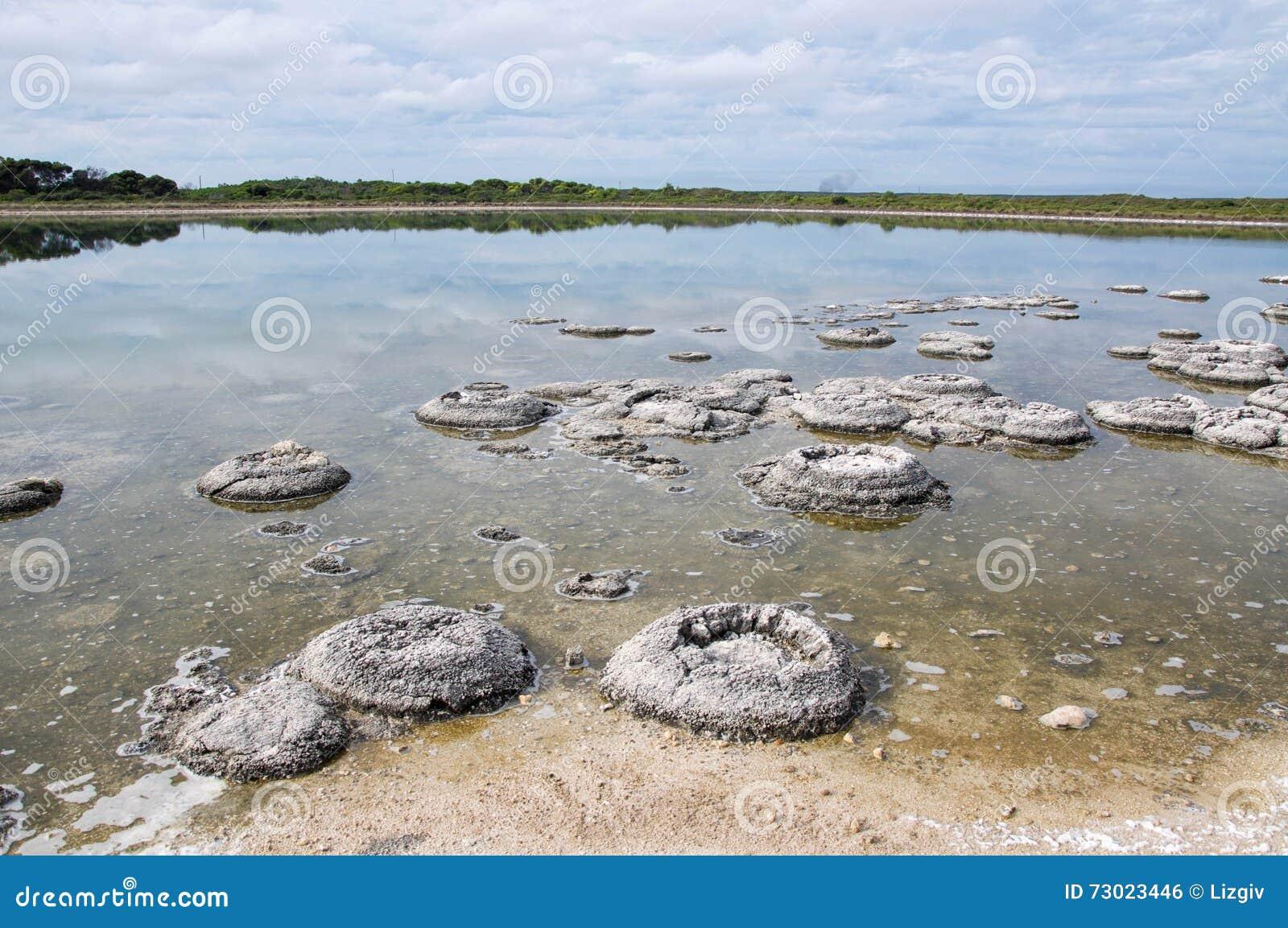 Stromatolites In Lake Thetis Stock Photo - Image: 73023446