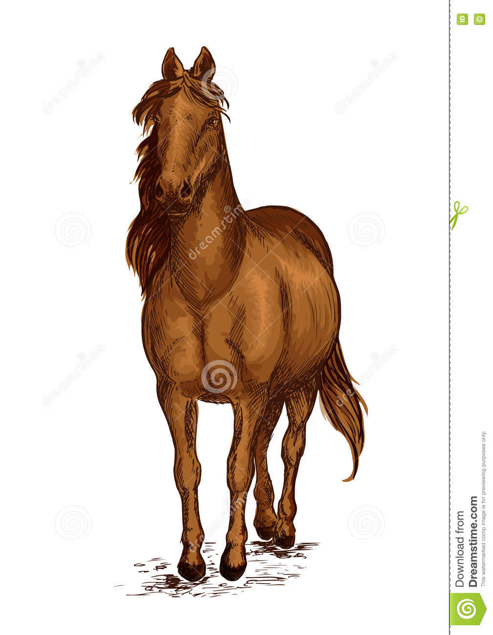 Strong Brown Arabian Horse Mustang Portrait Stock Vector Illustration Of Racehorse Animal 81955765