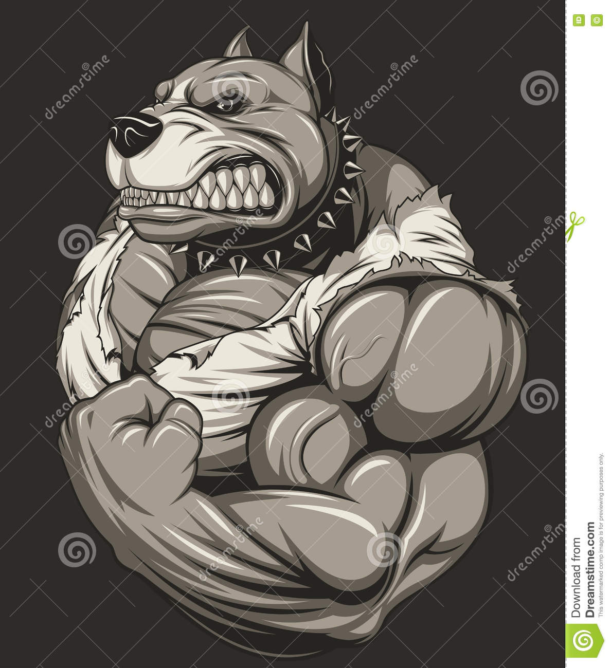 Strong Pitbull Bodybuilder Cartoon Vector | CartoonDealer
