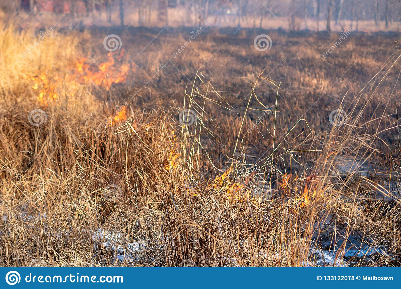 A strong fire spreads in gusts of wind through dry grass