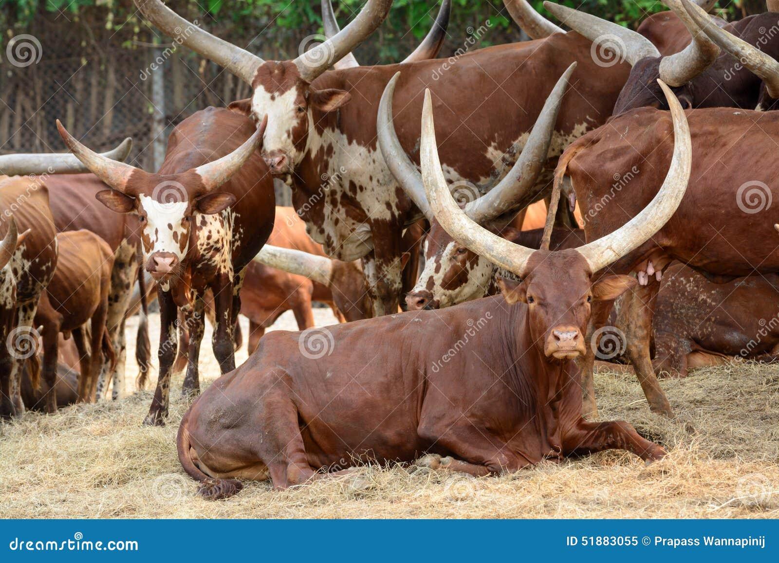 strong bull cartoon vector 51270949. Black Bedroom Furniture Sets. Home Design Ideas