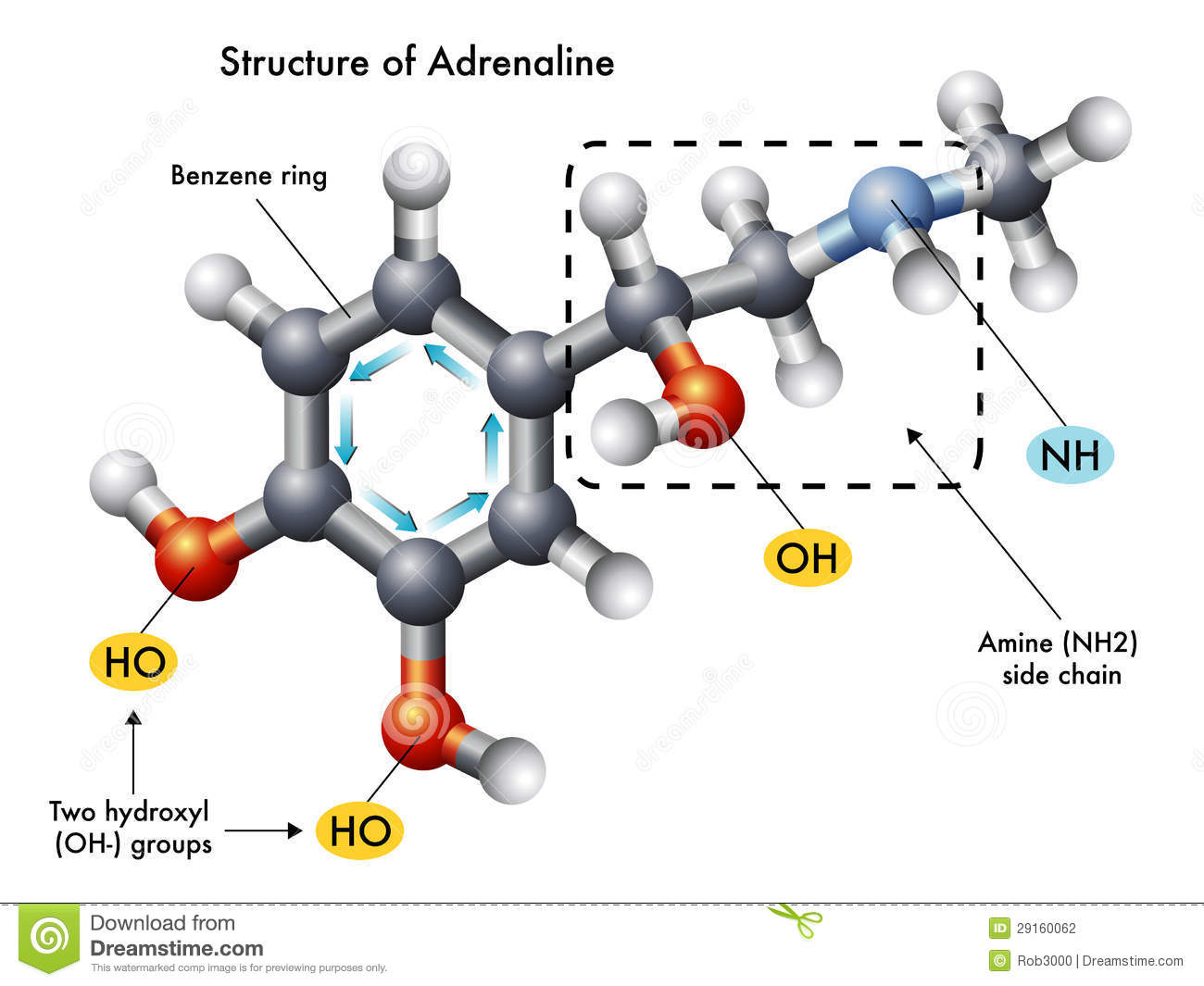 Structure Of Adrenaline Stock Vector Illustration Of
