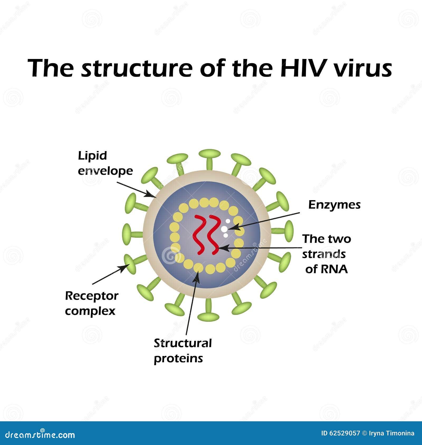 Anatomy of the aids virus
