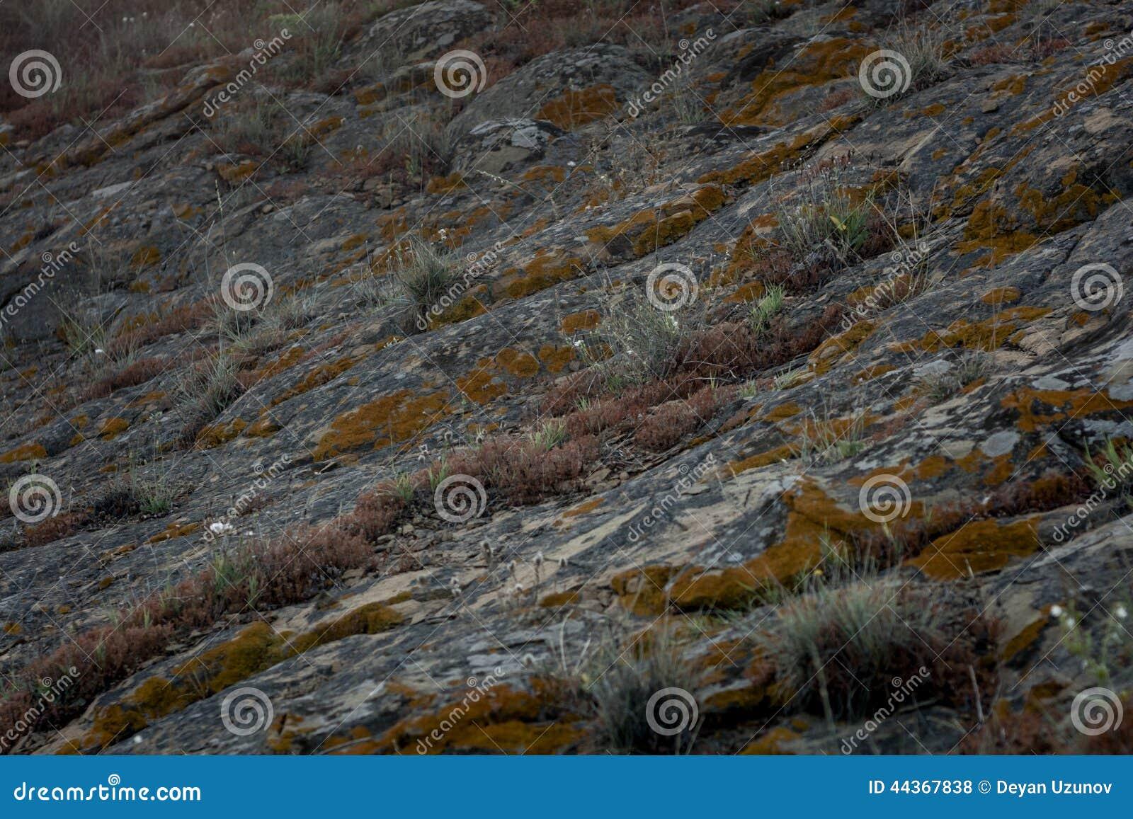 Structure et herbe de roche