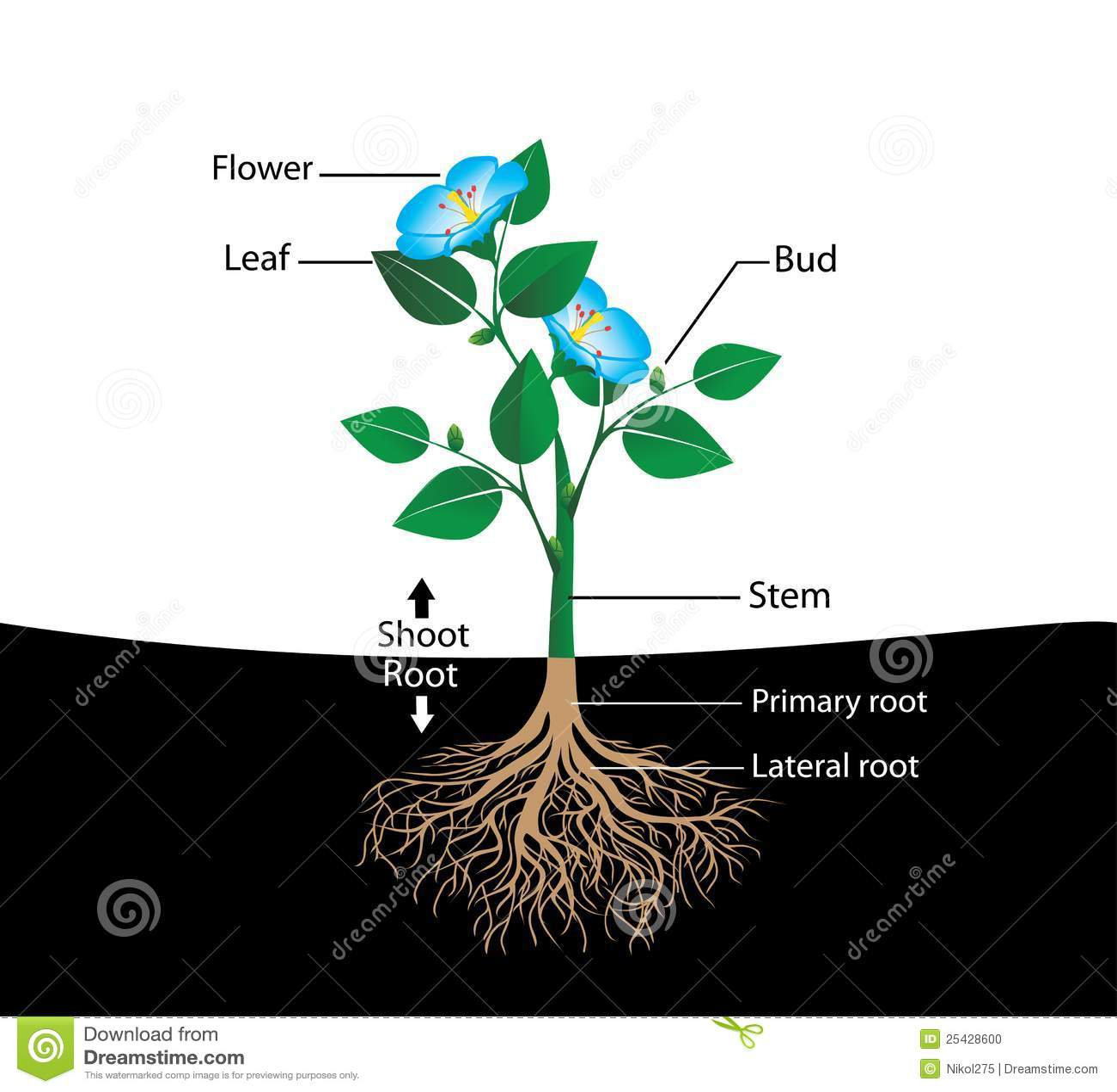 Structure Flower Stock Vector  Illustration Of Petal