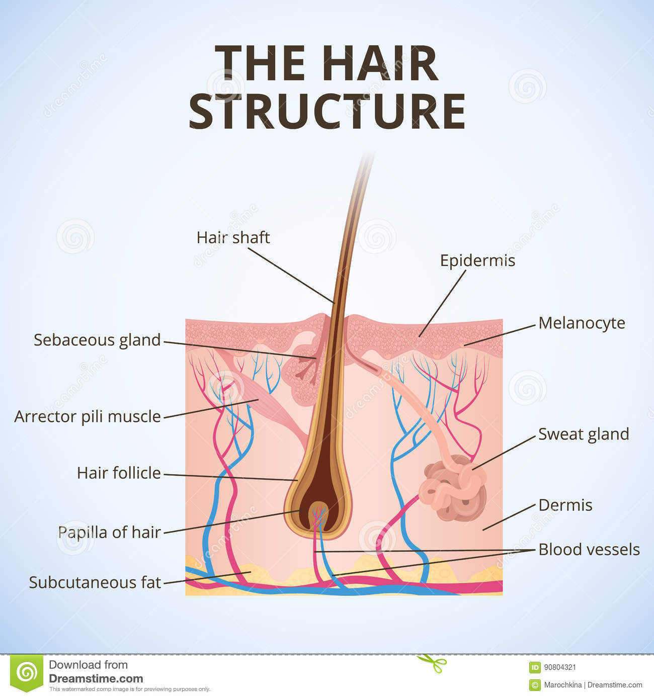 The structure of the hair stock vector. Illustration of core - 90804321