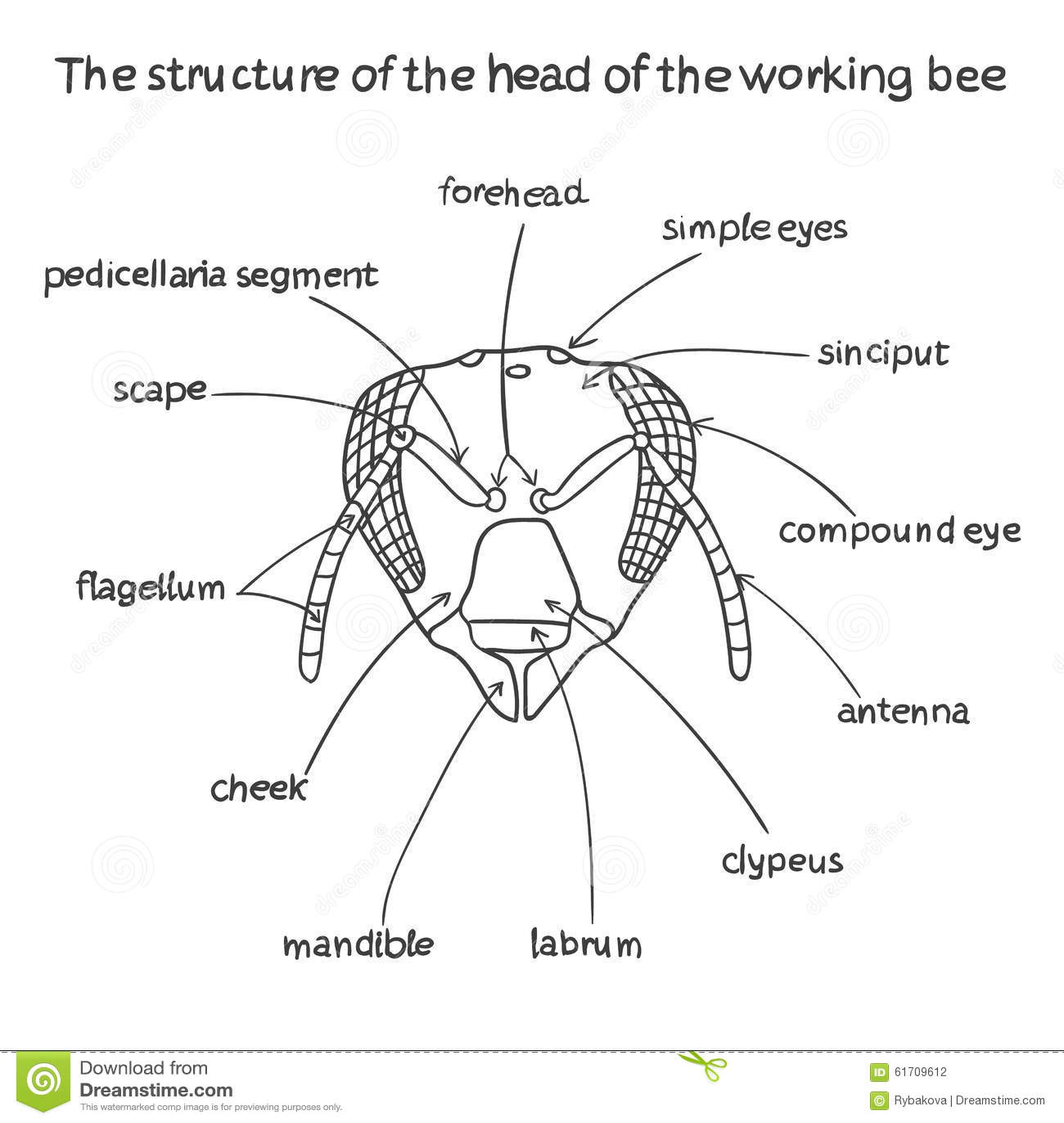 Anatomy of a beehive 1486229 - togelmaya.info