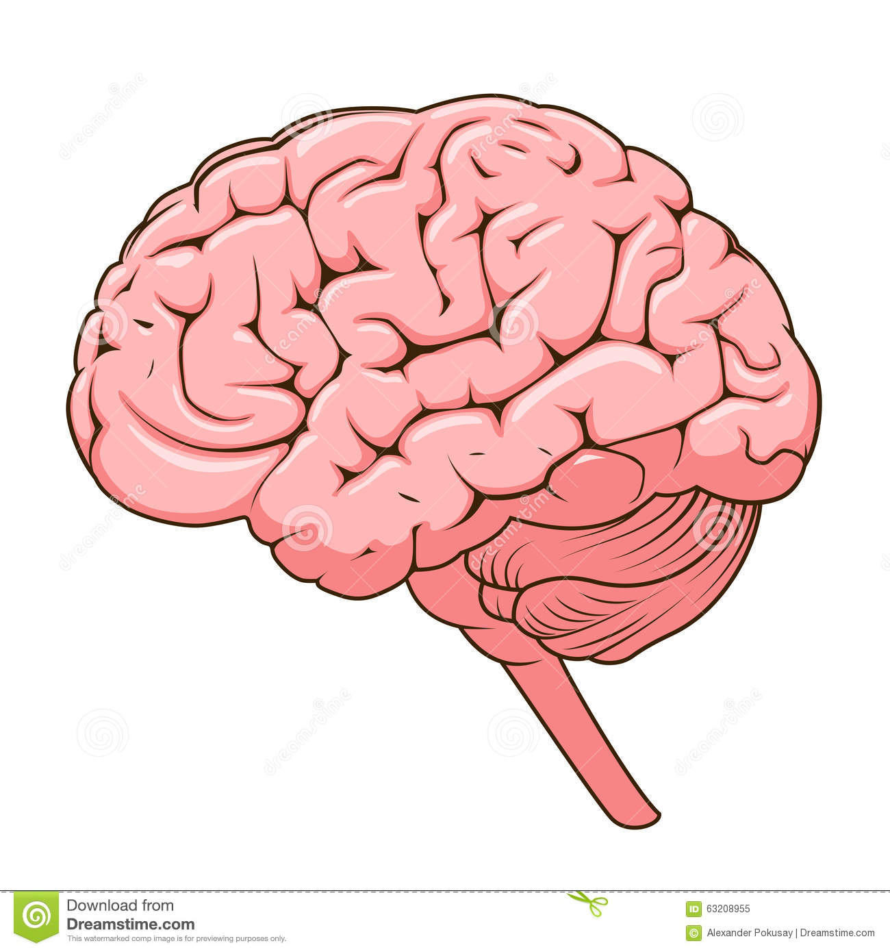 Structure Human Brain Schematic Vector Illustration Medical Science Educational Illustration on Wiring Harness Diagram Schematics Free Download On
