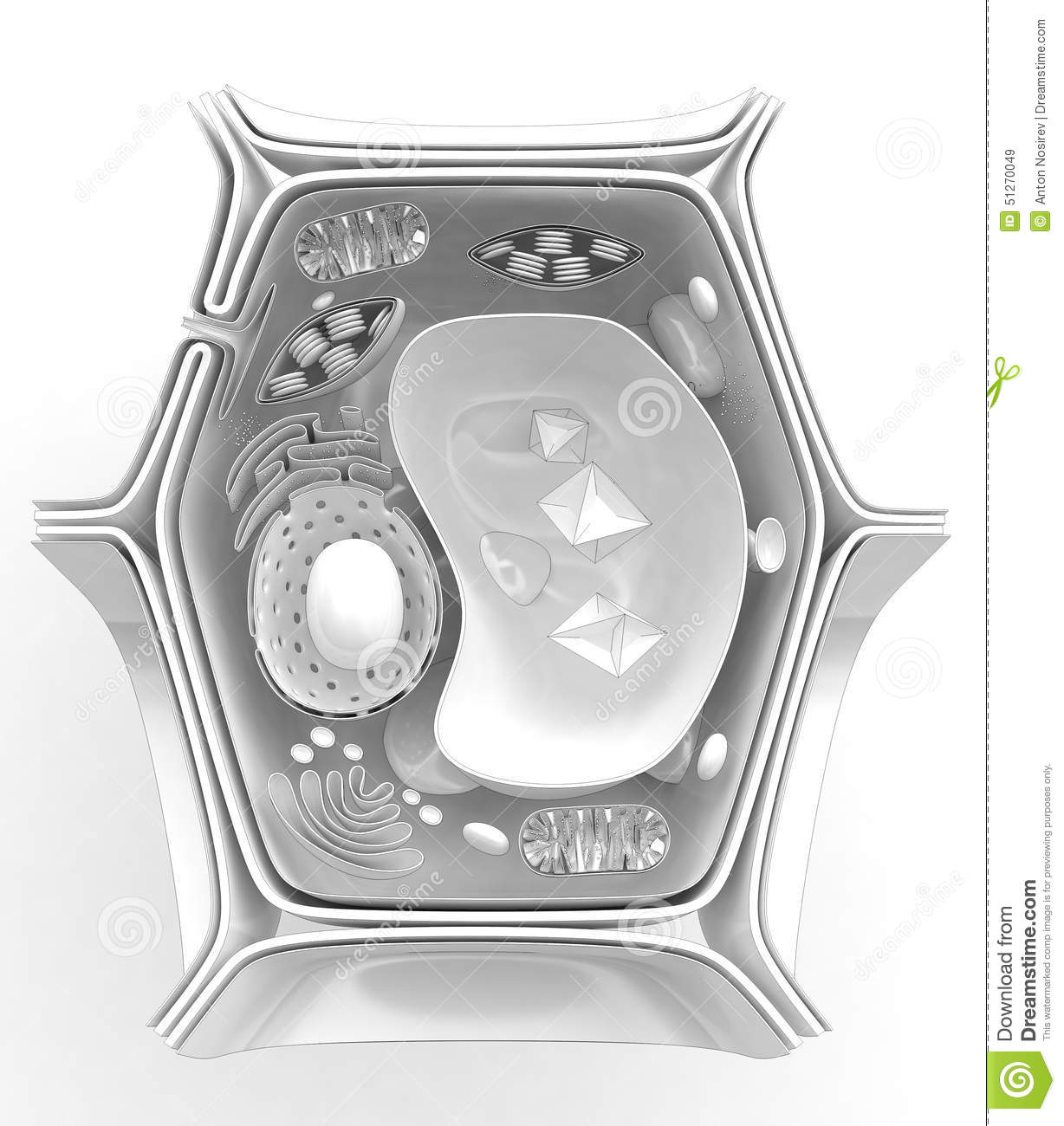 Structure Of The Plant Cell Stock Illustration - Image ...