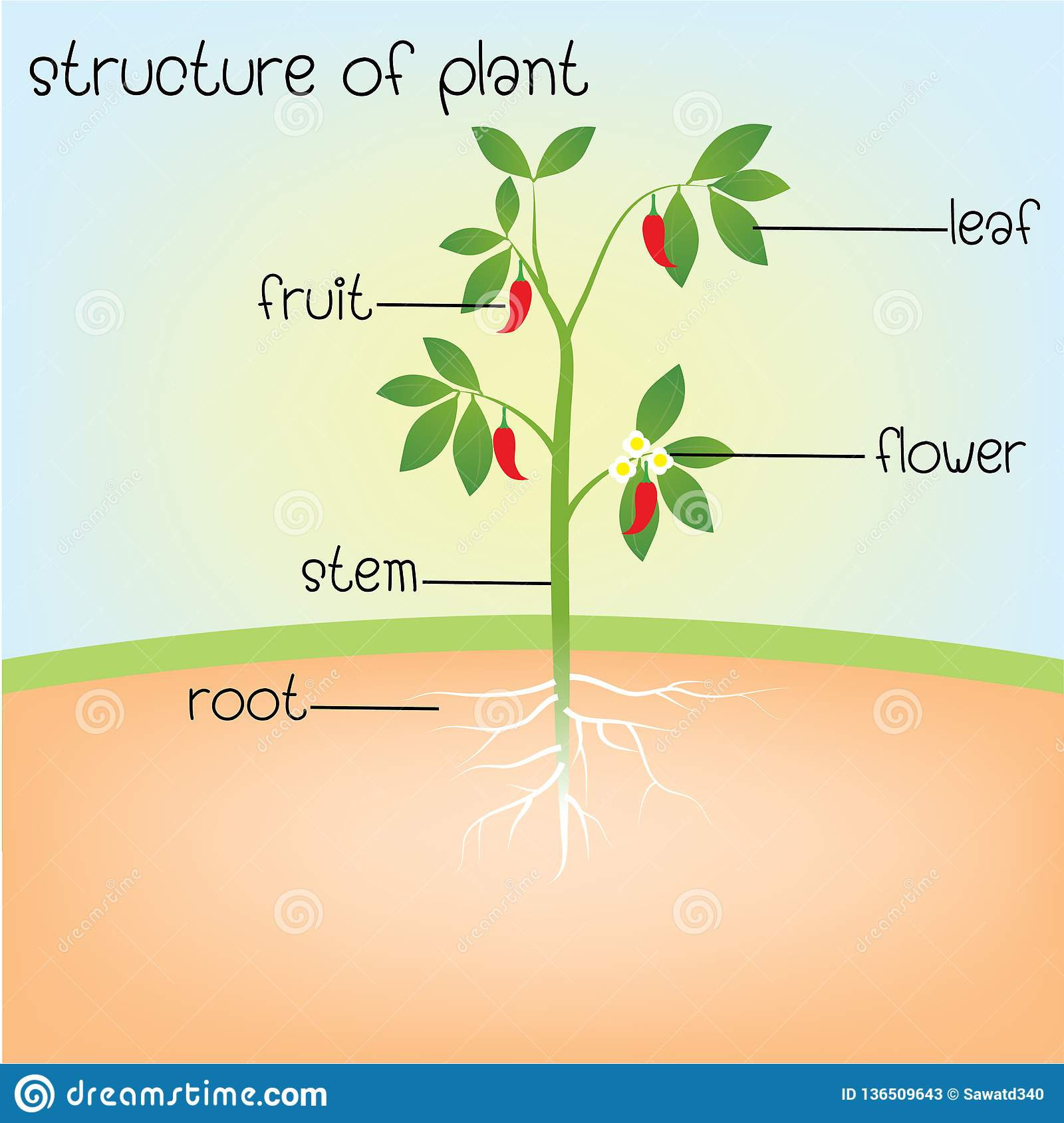 Structure Of Plant Stock Vector  Illustration Of Flora