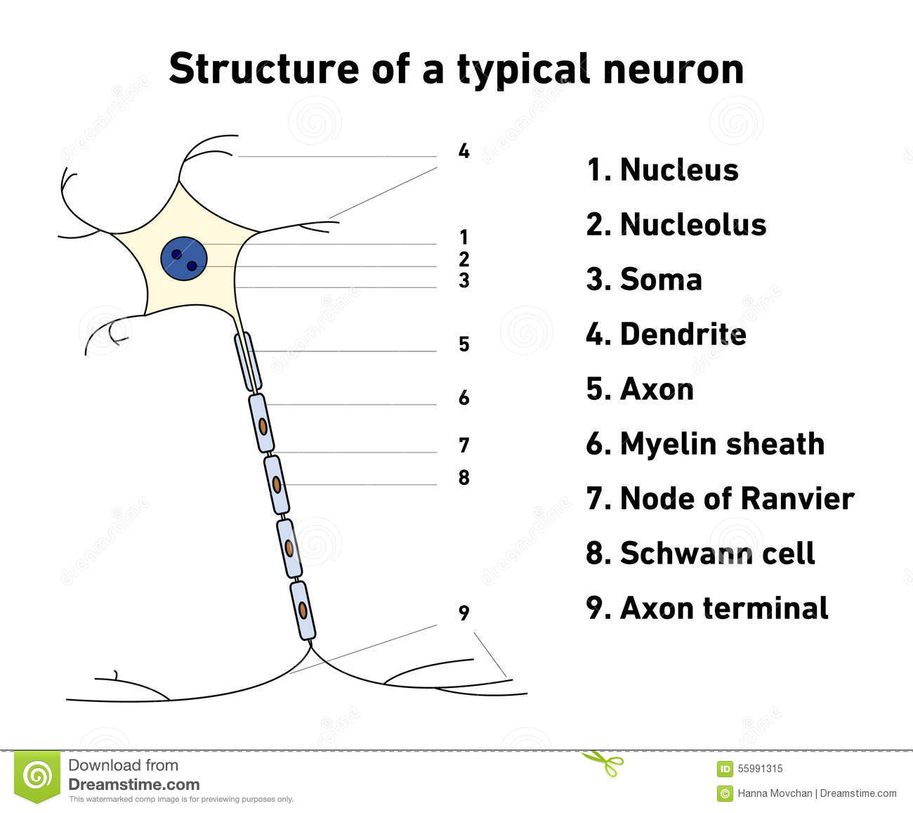 describing the intricate processes of a neuron El-watch's neuron sensors help them to connect  factories, buildings and other installations contain more intricate production processes than ever staying in .