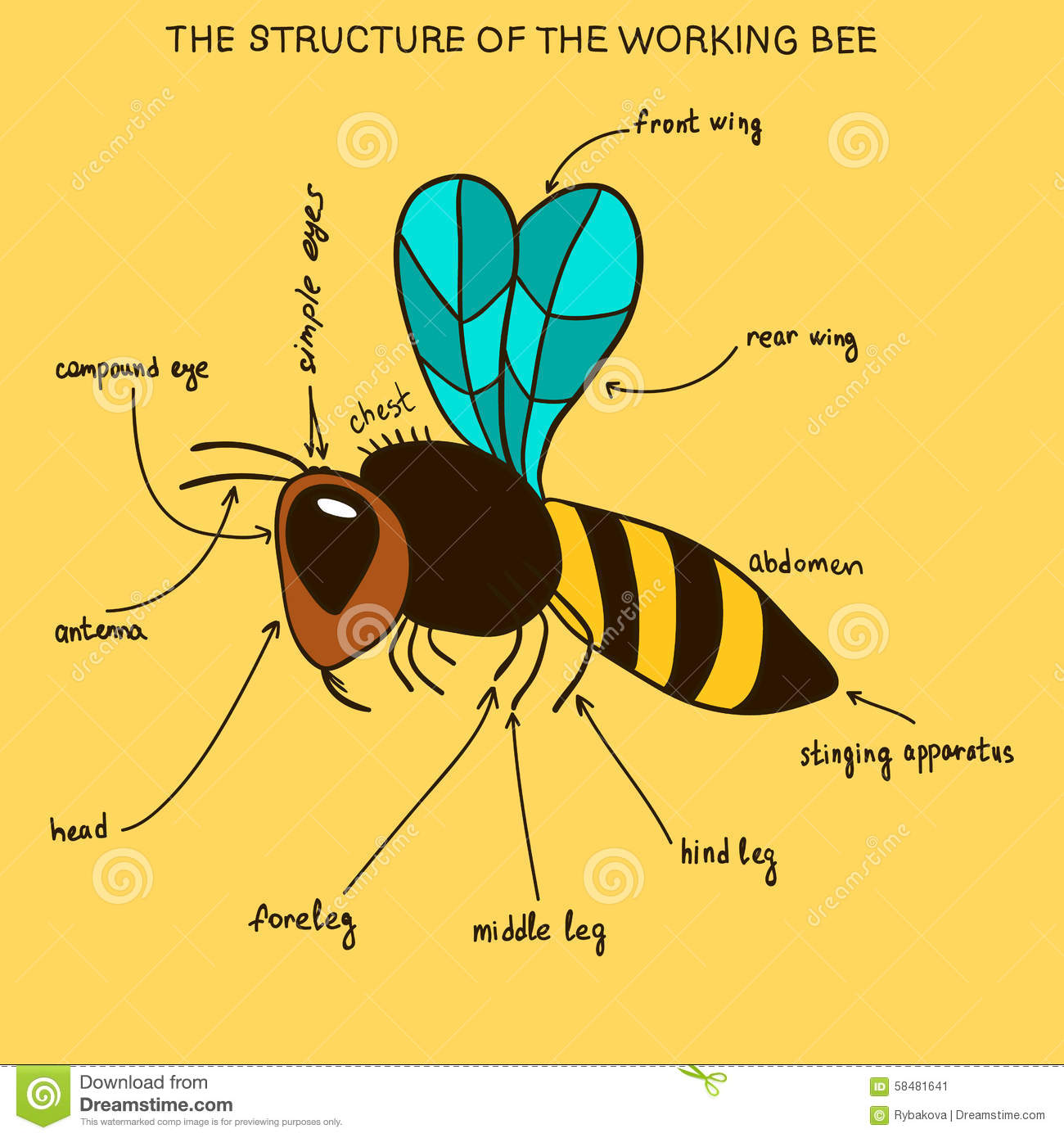 The Structure Of The Working Bee doodle Stock Illustration Image 58481641
