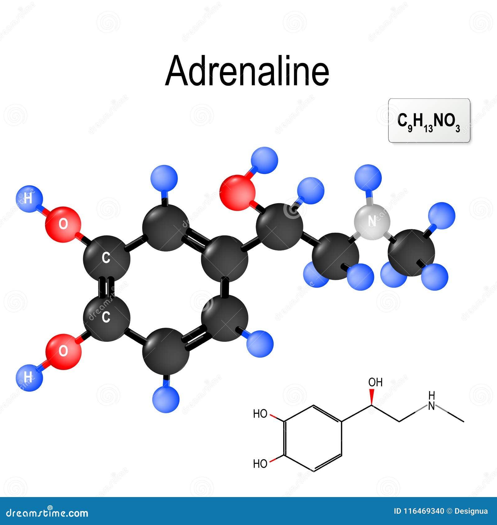 Structureel chemisch formule en model van molecule van adrenaline