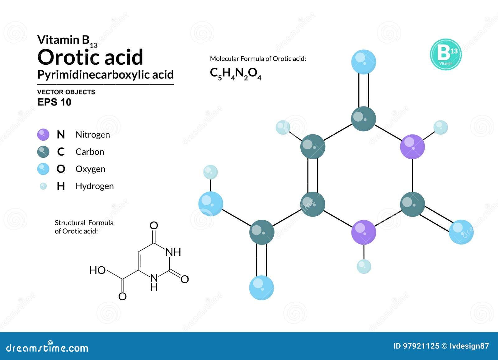 Structureel chemisch moleculair formule en model van Orotic zuur De atomen worden vertegenwoordigd als gebieden met kleurencodage