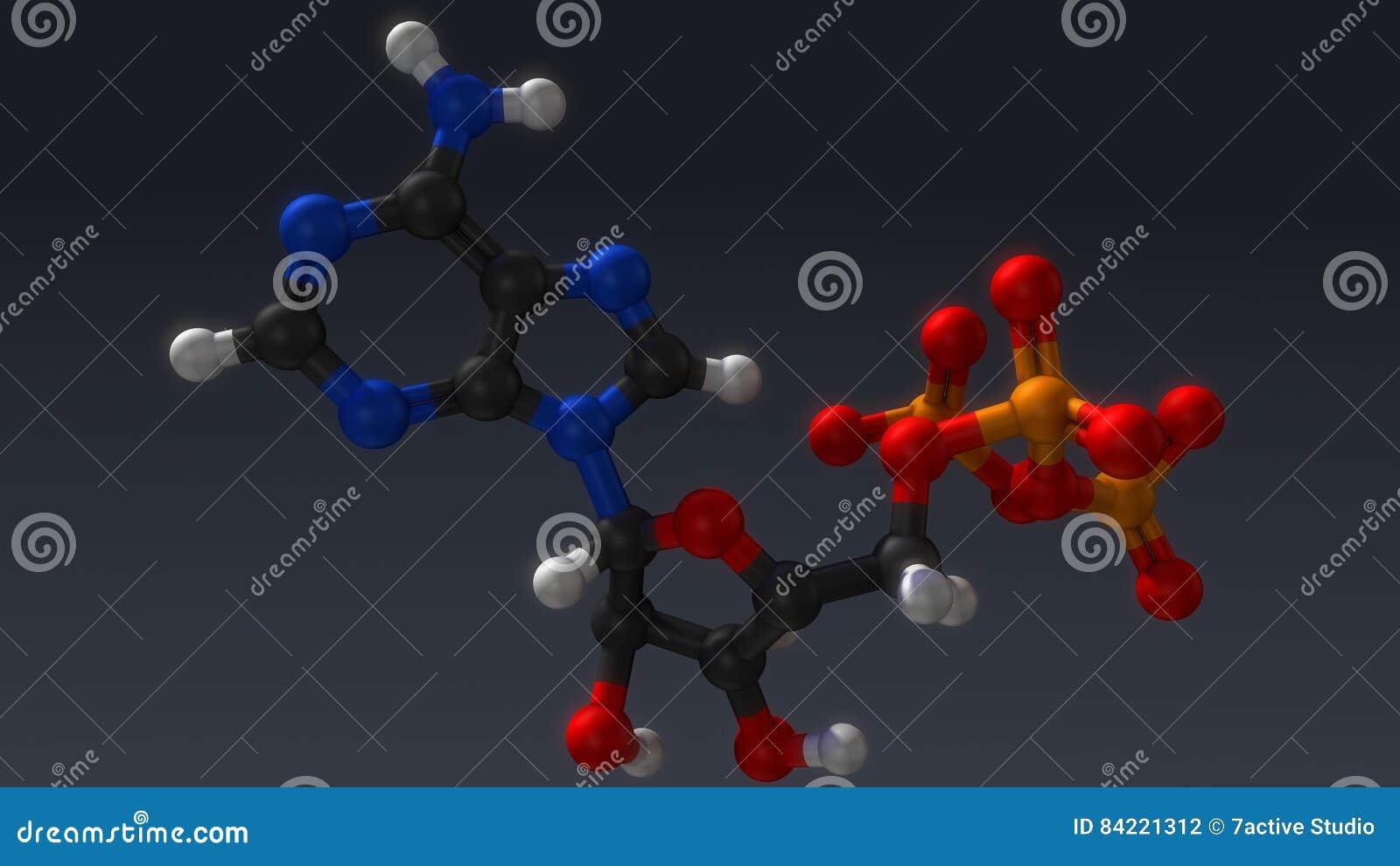Struktur för Adenosinetriphosphate