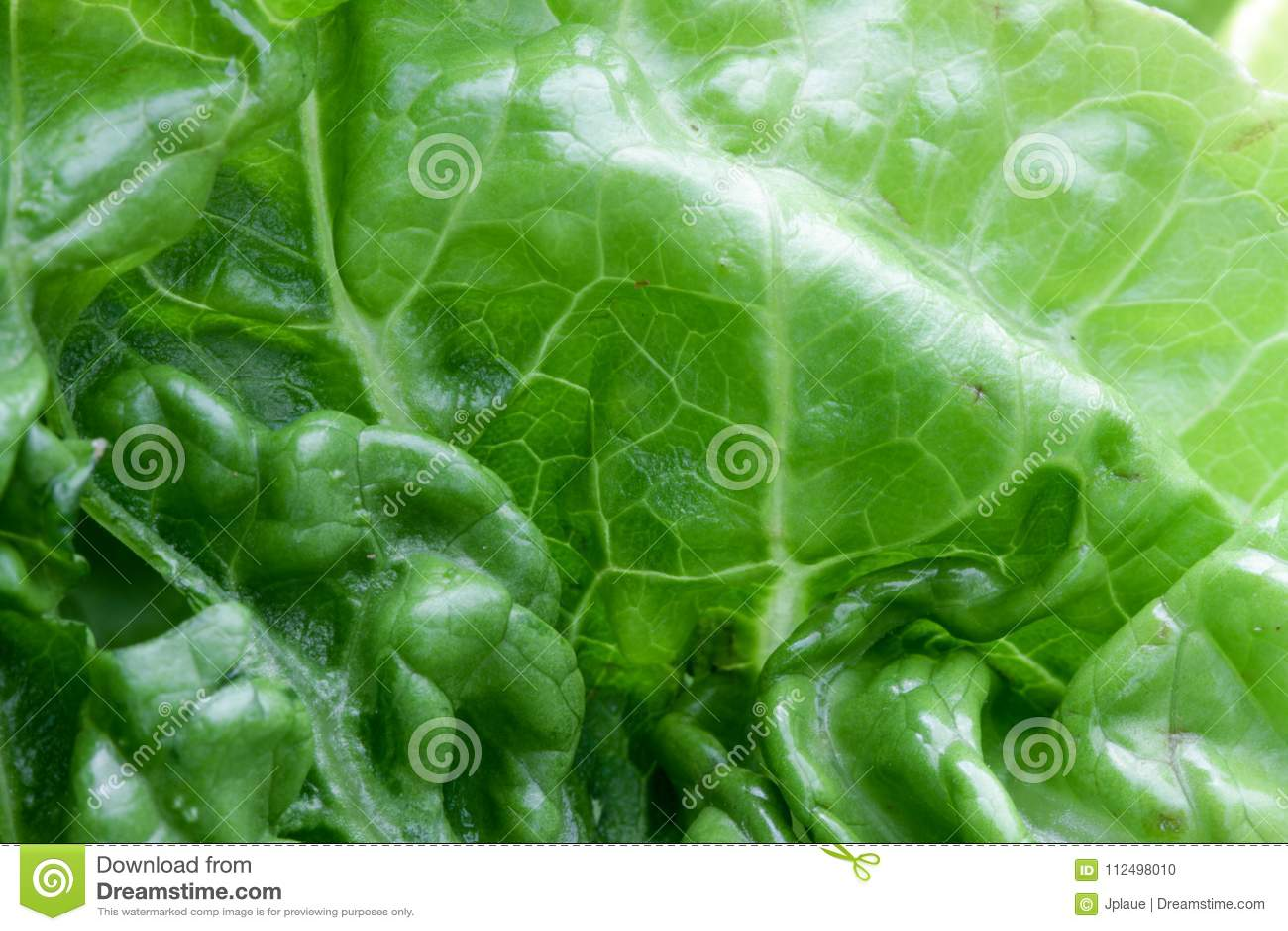 Struktur för bakgrund för vitamines för makro för grönsallatgrönsakveggie