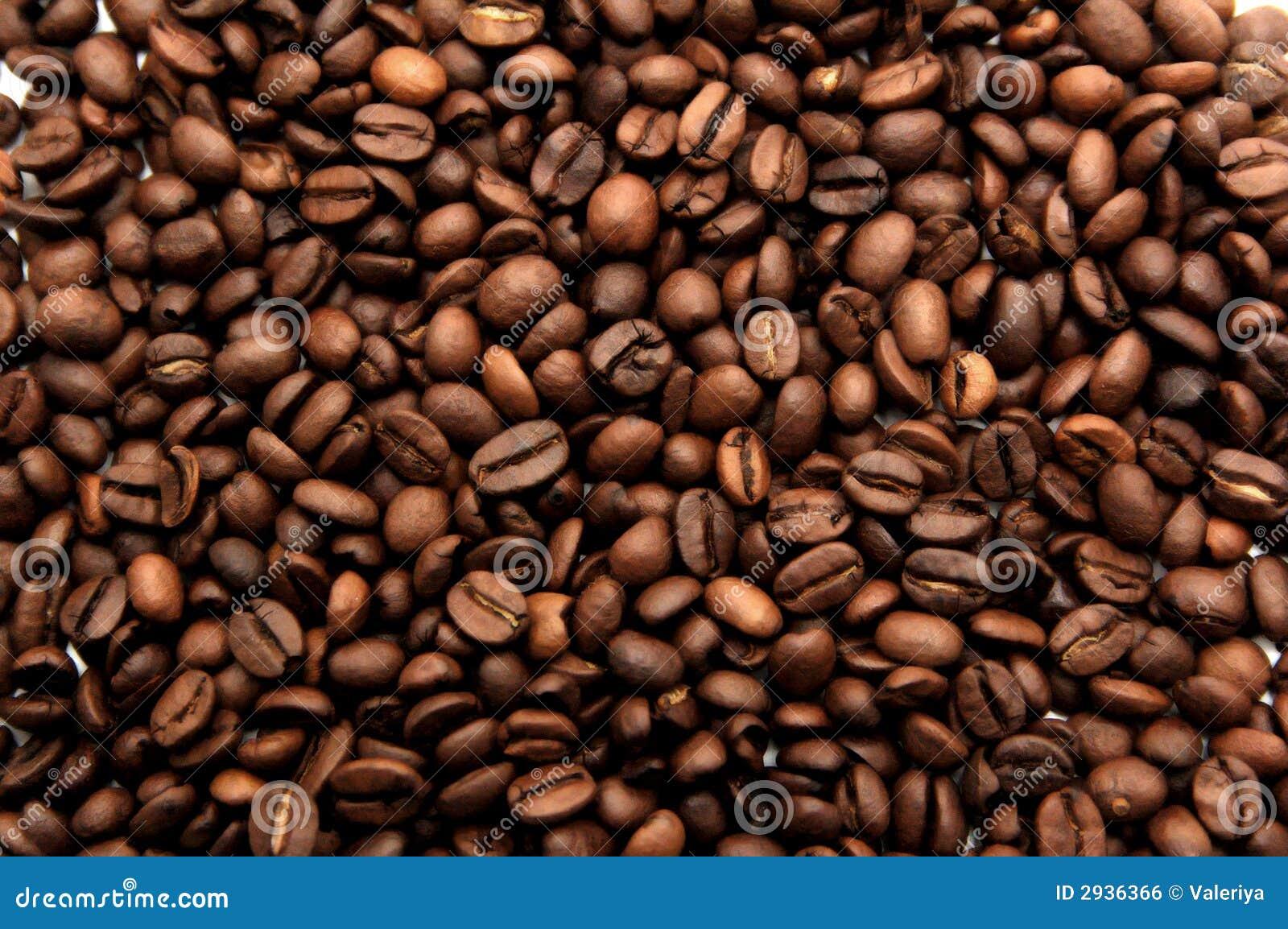 Struktura ziaren kawy