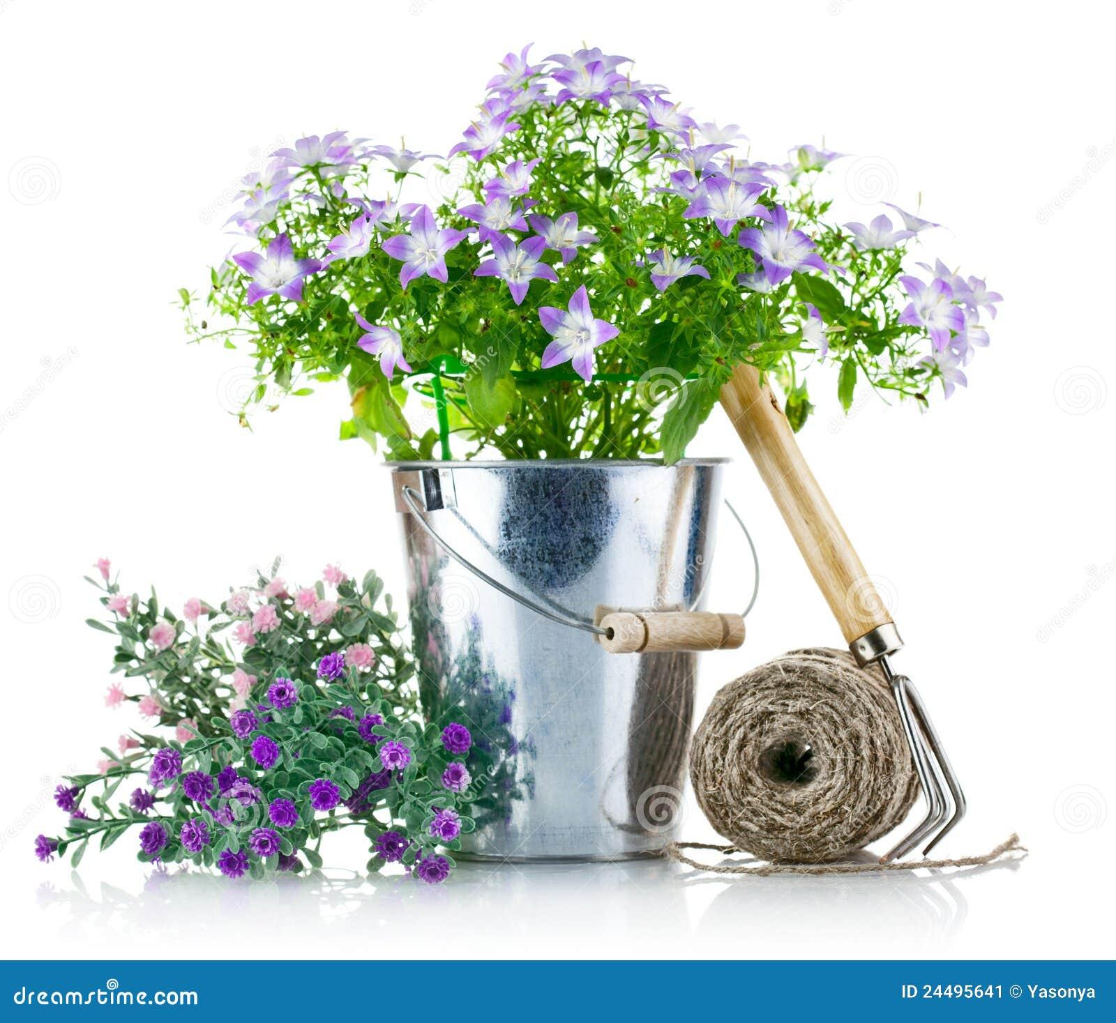 Strumentazione di giardino con i fiori viola immagine for Giardino con fiori