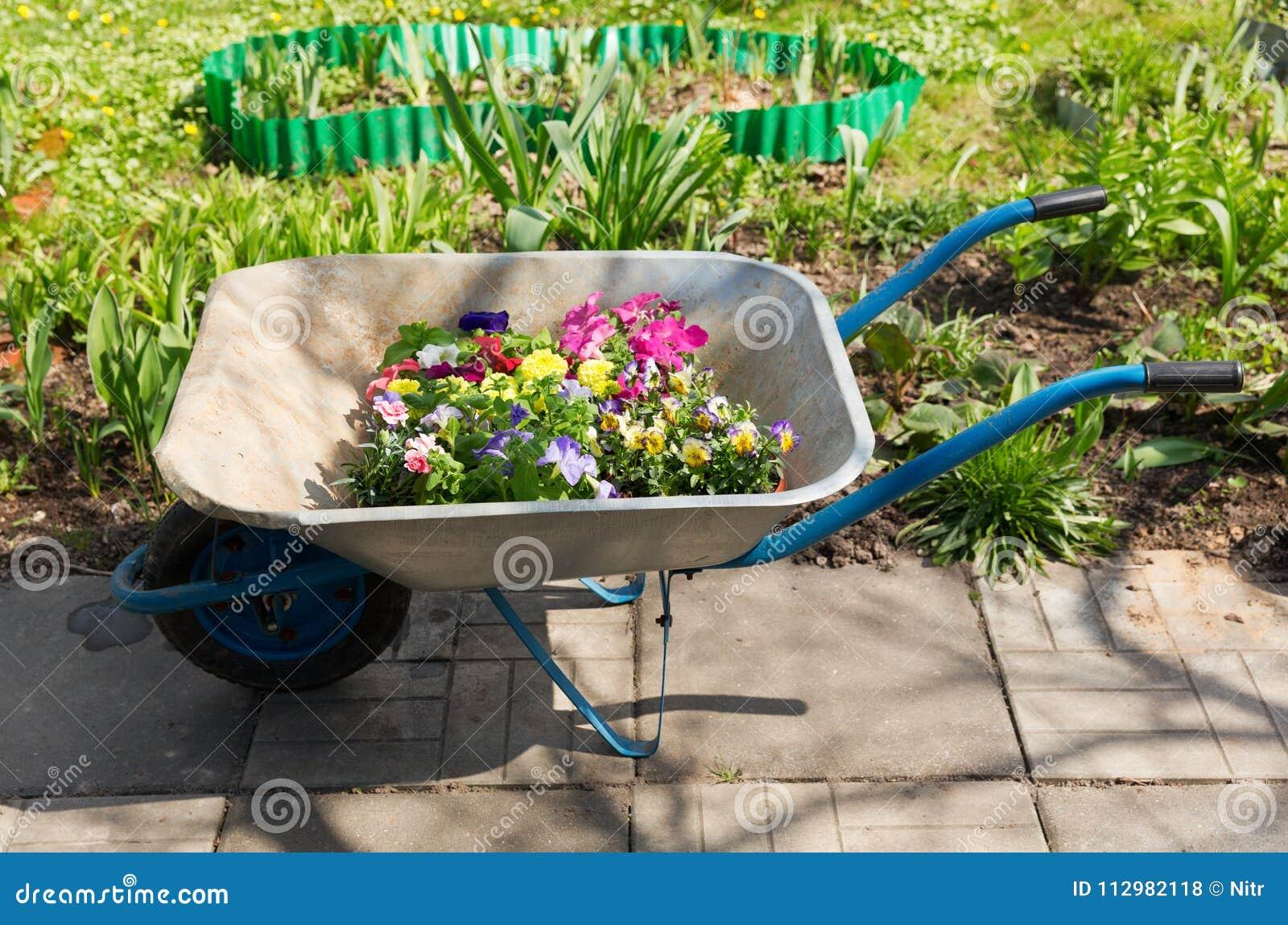 Strumenti di giardinaggio: carriola con i fiori variopinti