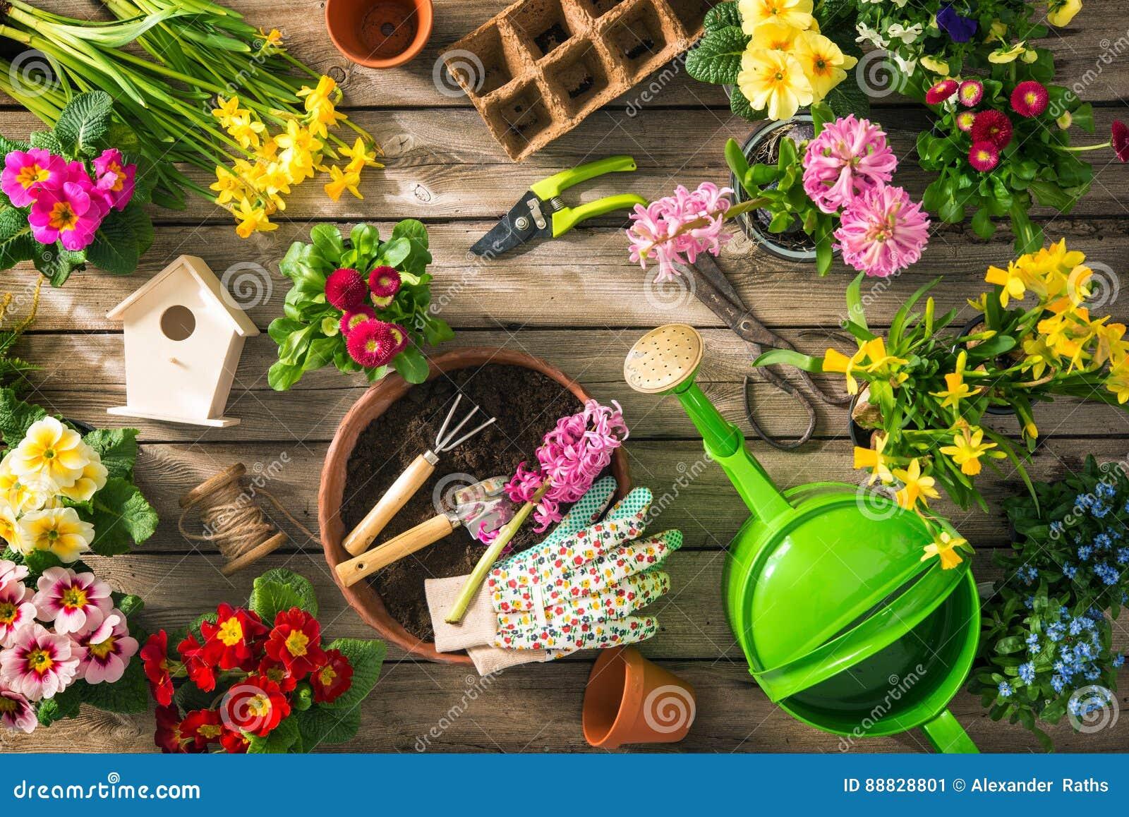 Giardinaggio Fiori.Strumenti Di Giardinaggio E Fiori Della Molla Immagine Stock